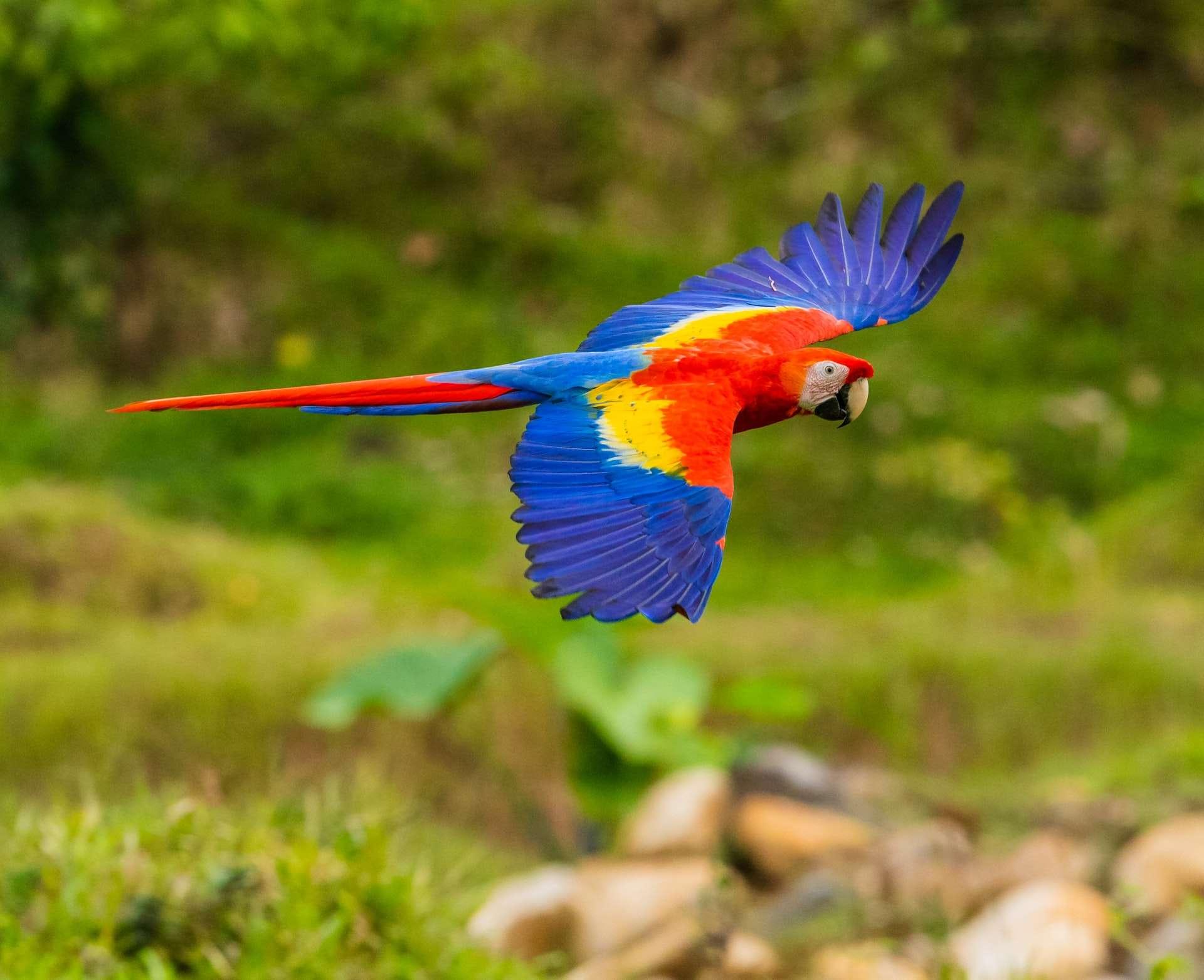 Papağanlar Sahibini Isırır mı? Kuduza Neden Olur mu? Papağan Isırması Nasıl Engellenir?
