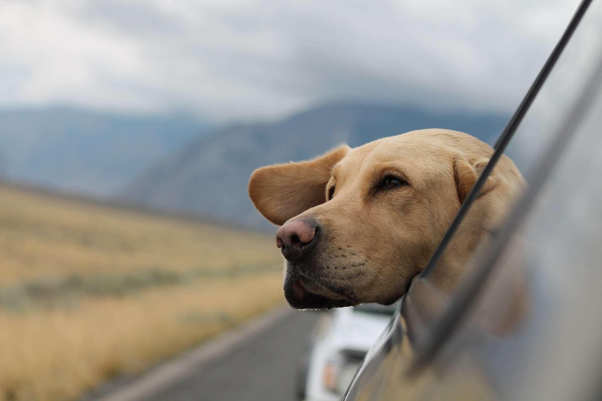 Evcil Hayvan ile Nasıl Seyahat Edilir?