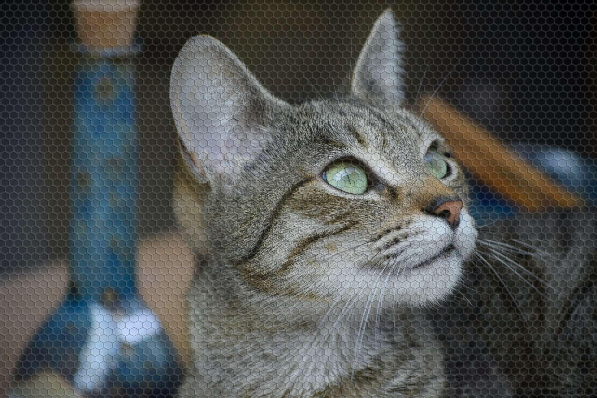 Kedinizin Mutsuz Olduğunu Gösteren 7 İşaret!