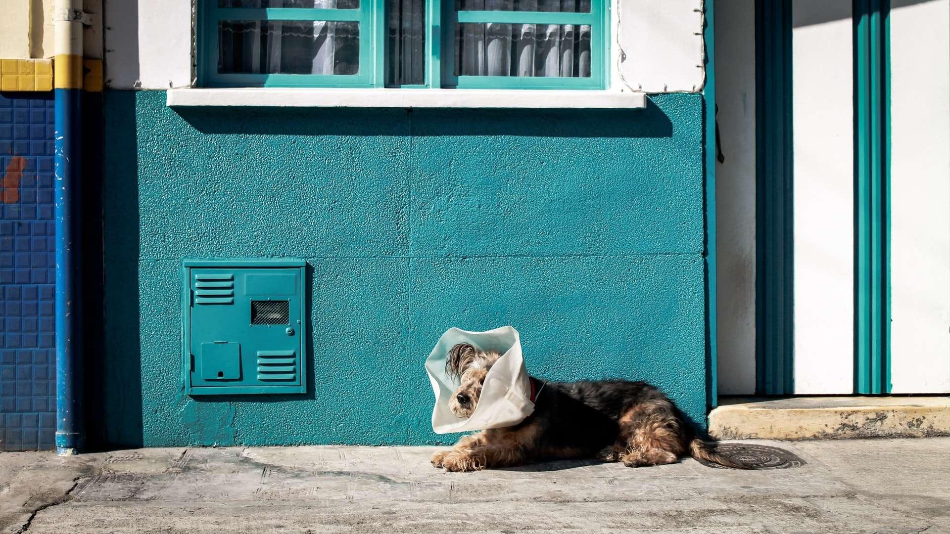 Sokakta Yaralı Hayvan Bulduğumuzda Ne Yapmalıyız?
