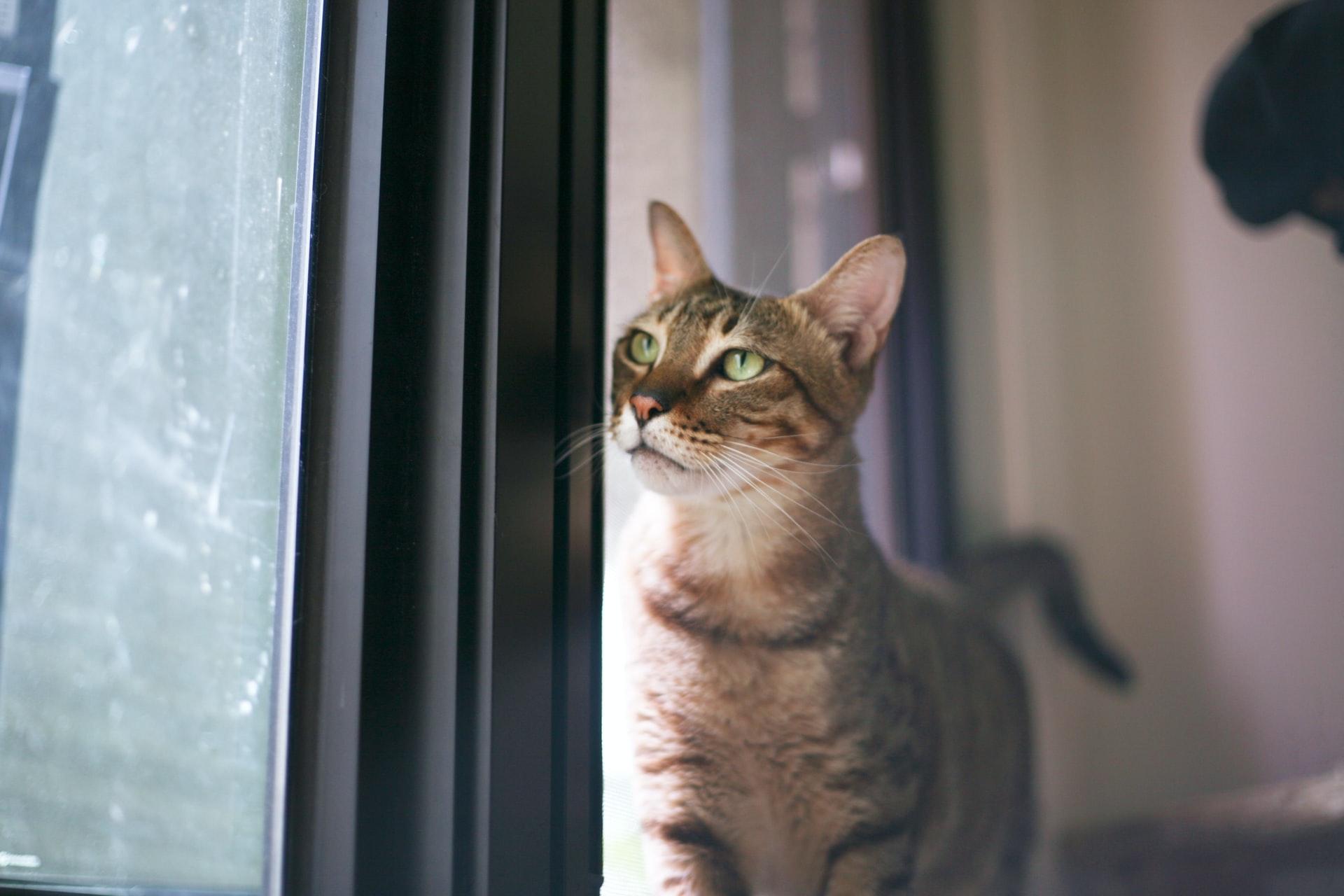 Evde Kedi Bakımı Nasıl Yapılır? Kediye Ev Yemeği Verilir mi?