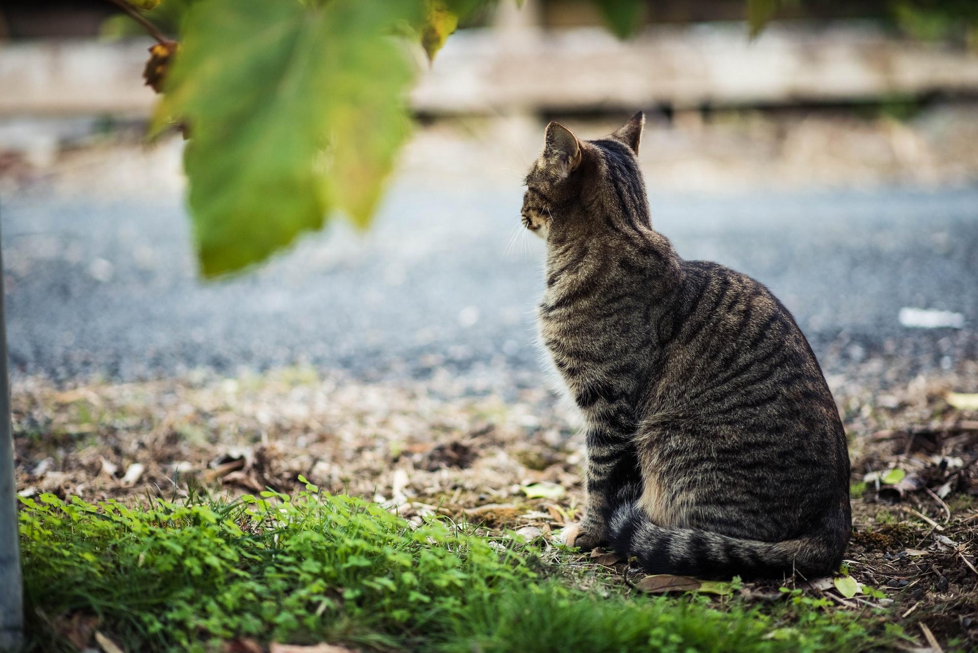 Kedim Kayboldu! Kaybolan Kedi Nasıl Bulunur?