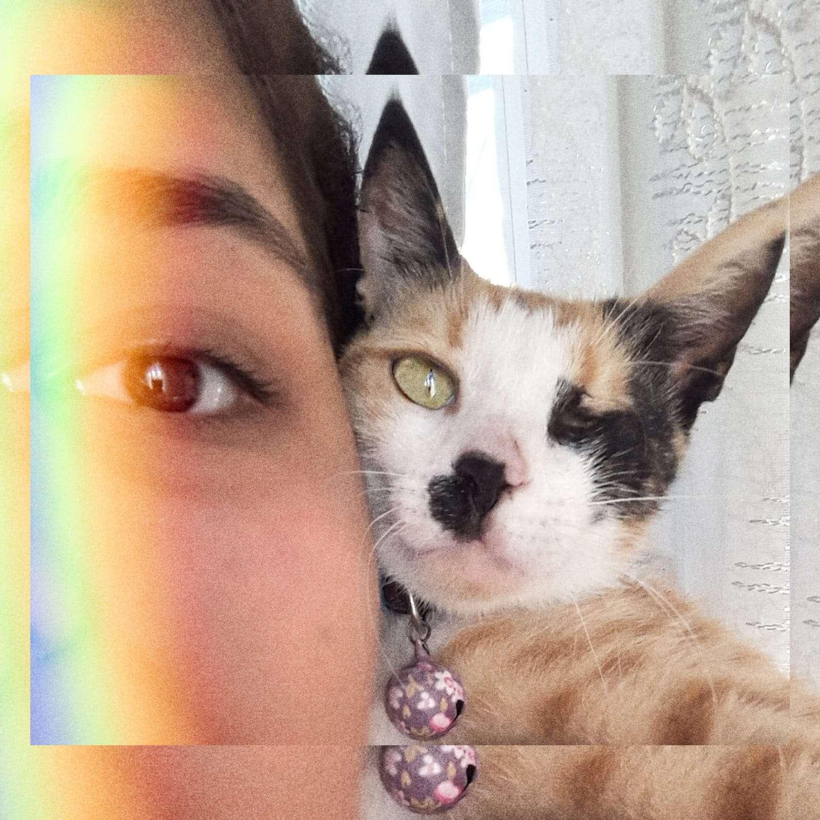 Kedim Kayıp