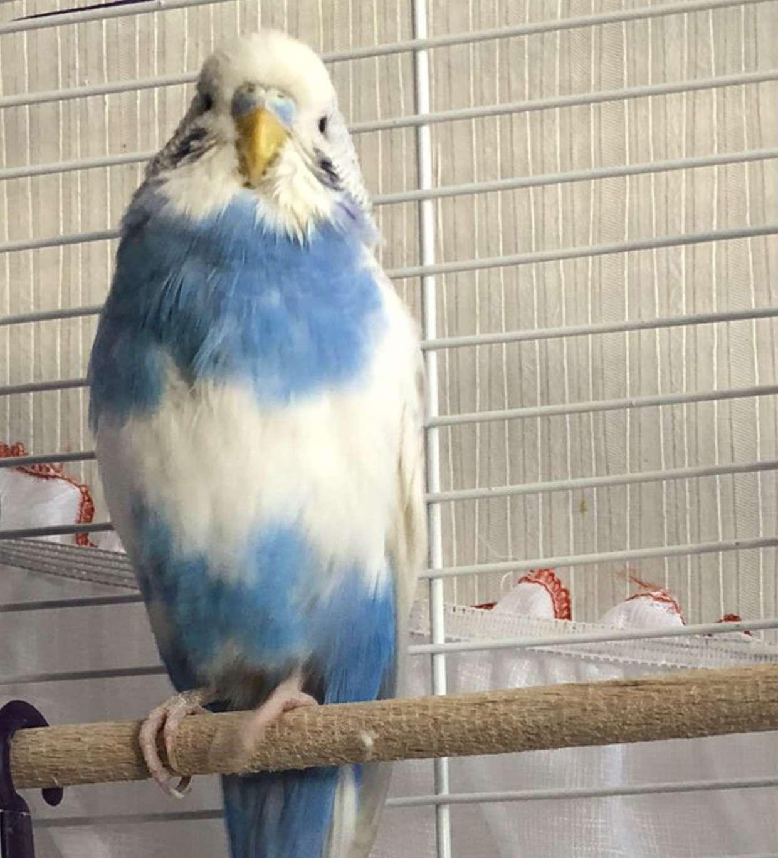 Kayıp kuşunun sahibini arıyorum