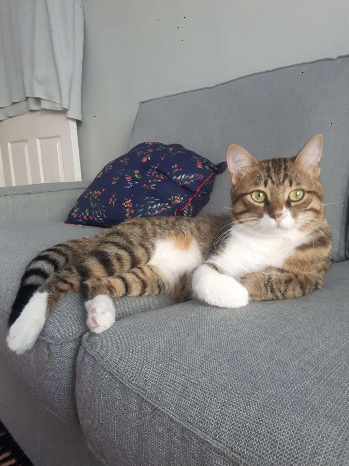 Kedimiz Bulgur Kayboldu
