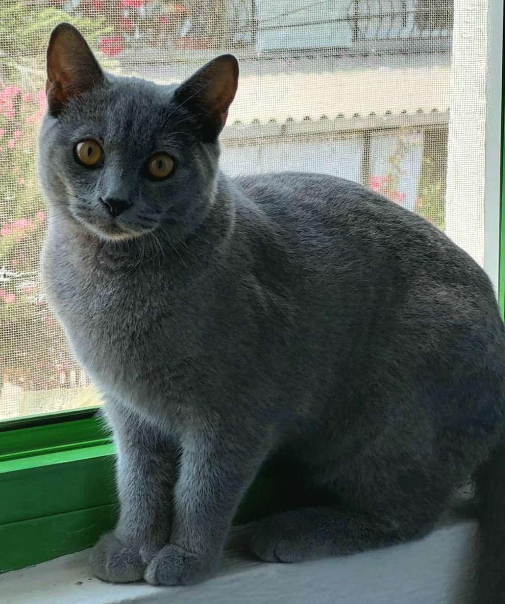 Kedim Kayıp_Adana