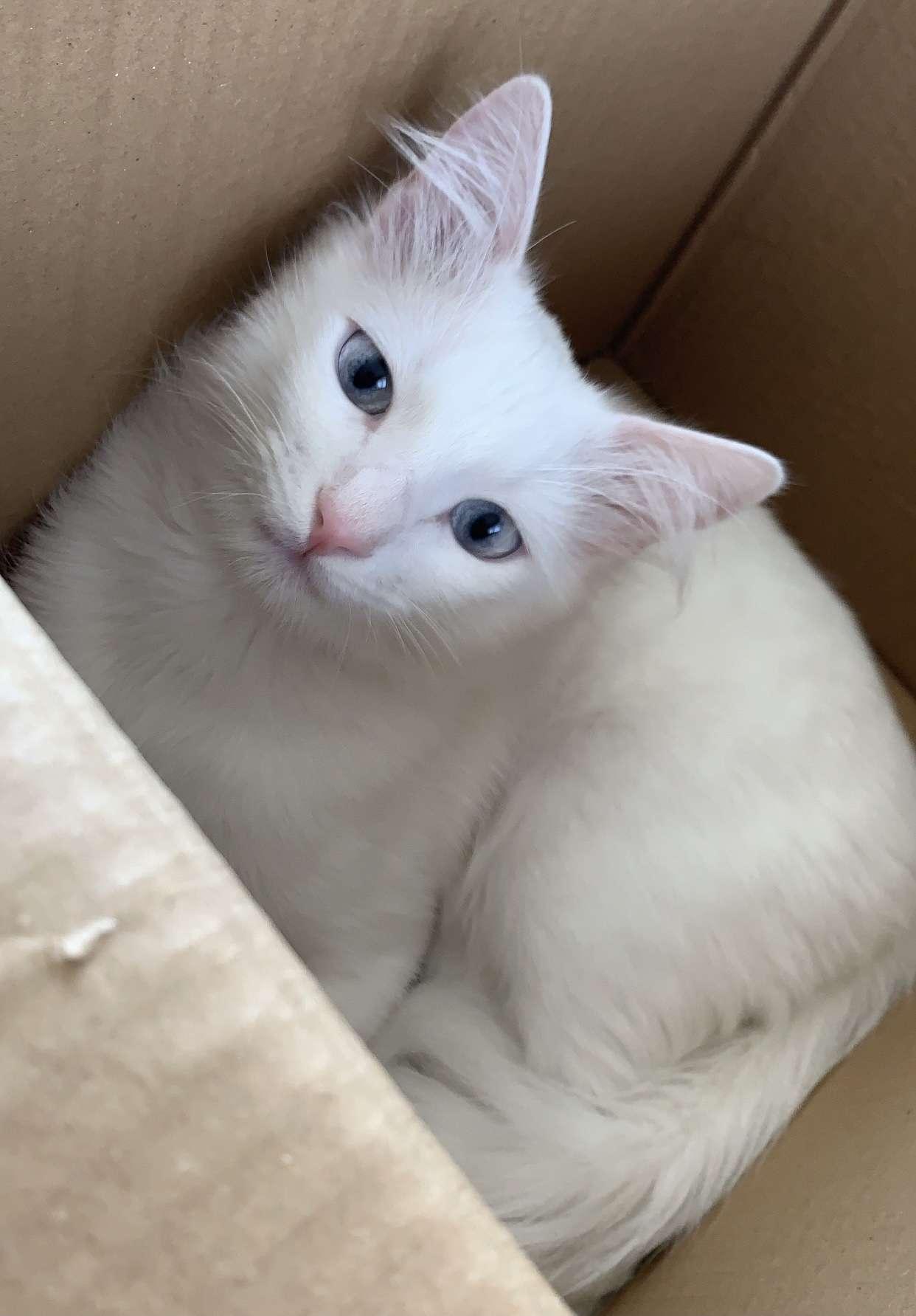 Kağıthane Gürsel mahallesi kayıp kedi