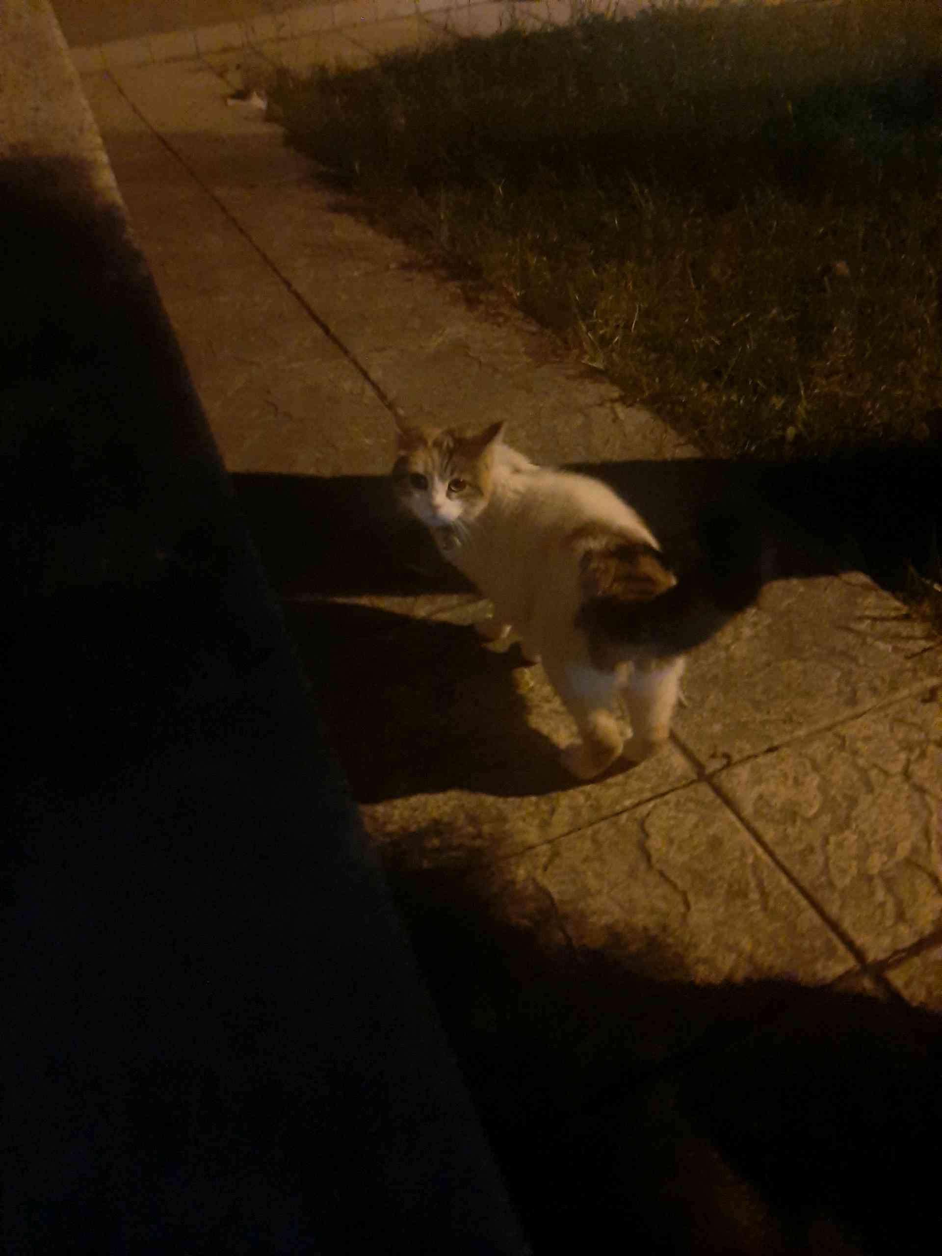 Eryaman Yavuz Selim Mah. Utku Sitesi Mavi Tasmalı Kedi