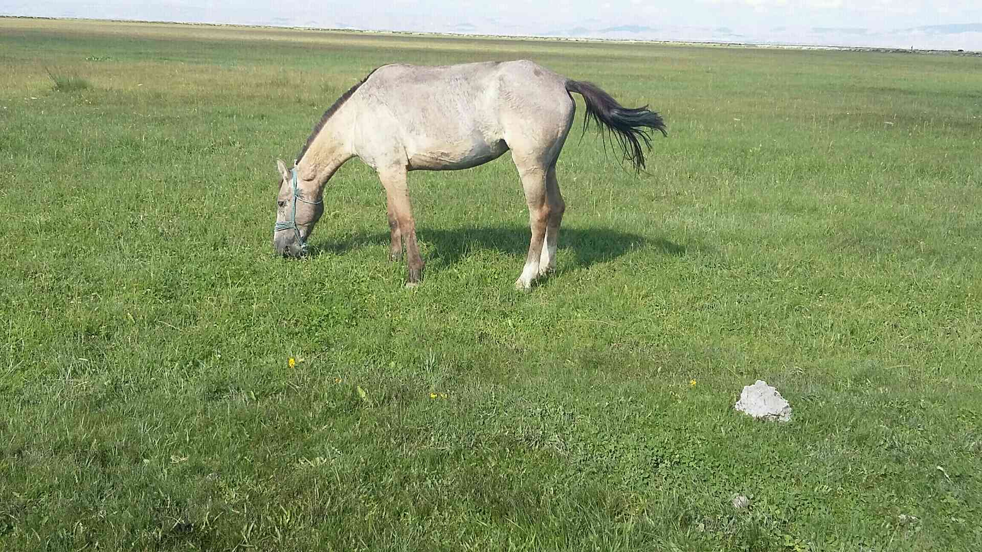Kayseri develi cayırözü koyunde atım kayboldu