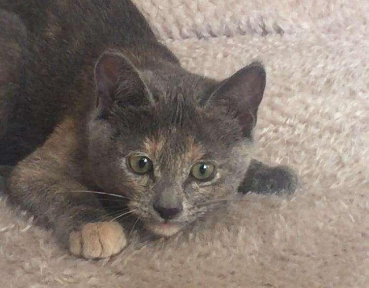 antalya/muratpaşa kayıp kedi