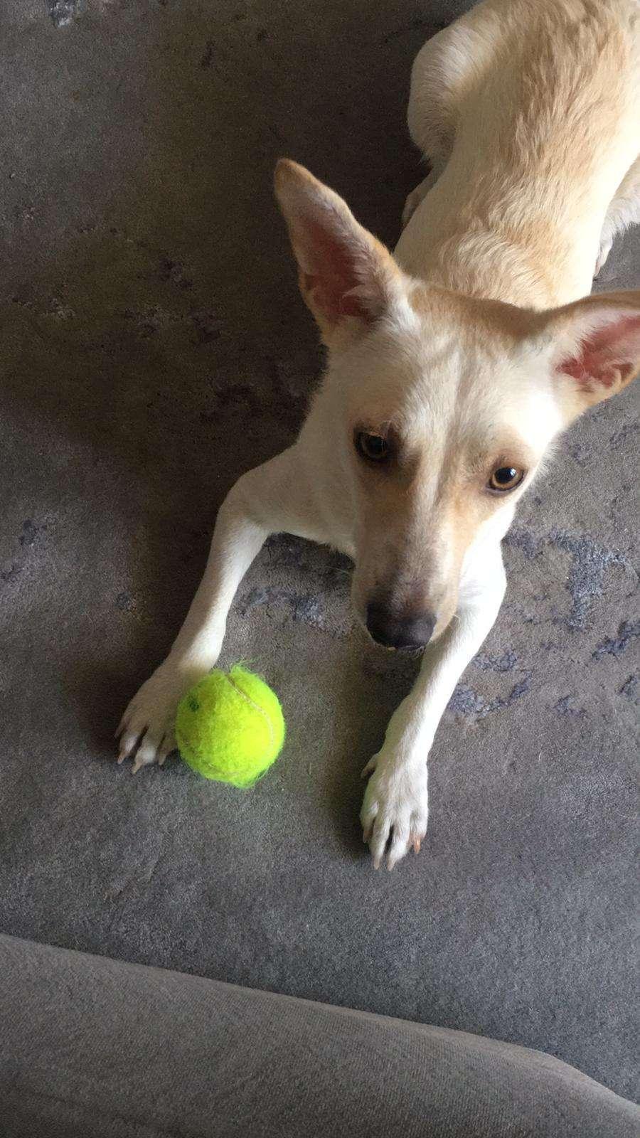 Köpeğim Pia kayıp!!!