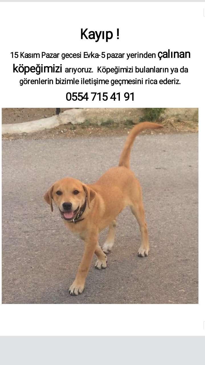Kayıp Köpek Boncuk