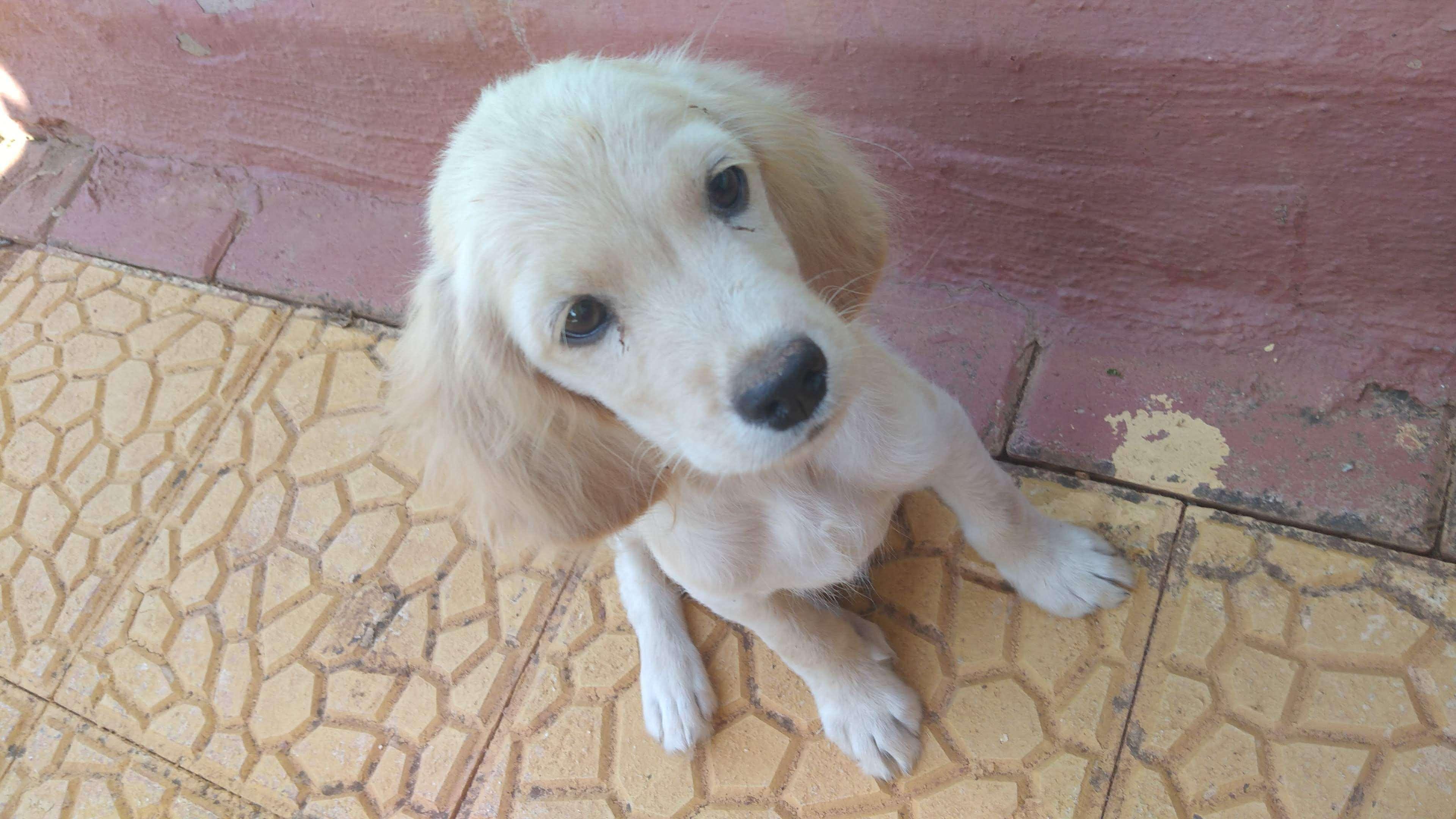 Gaziantep kayıp köpek
