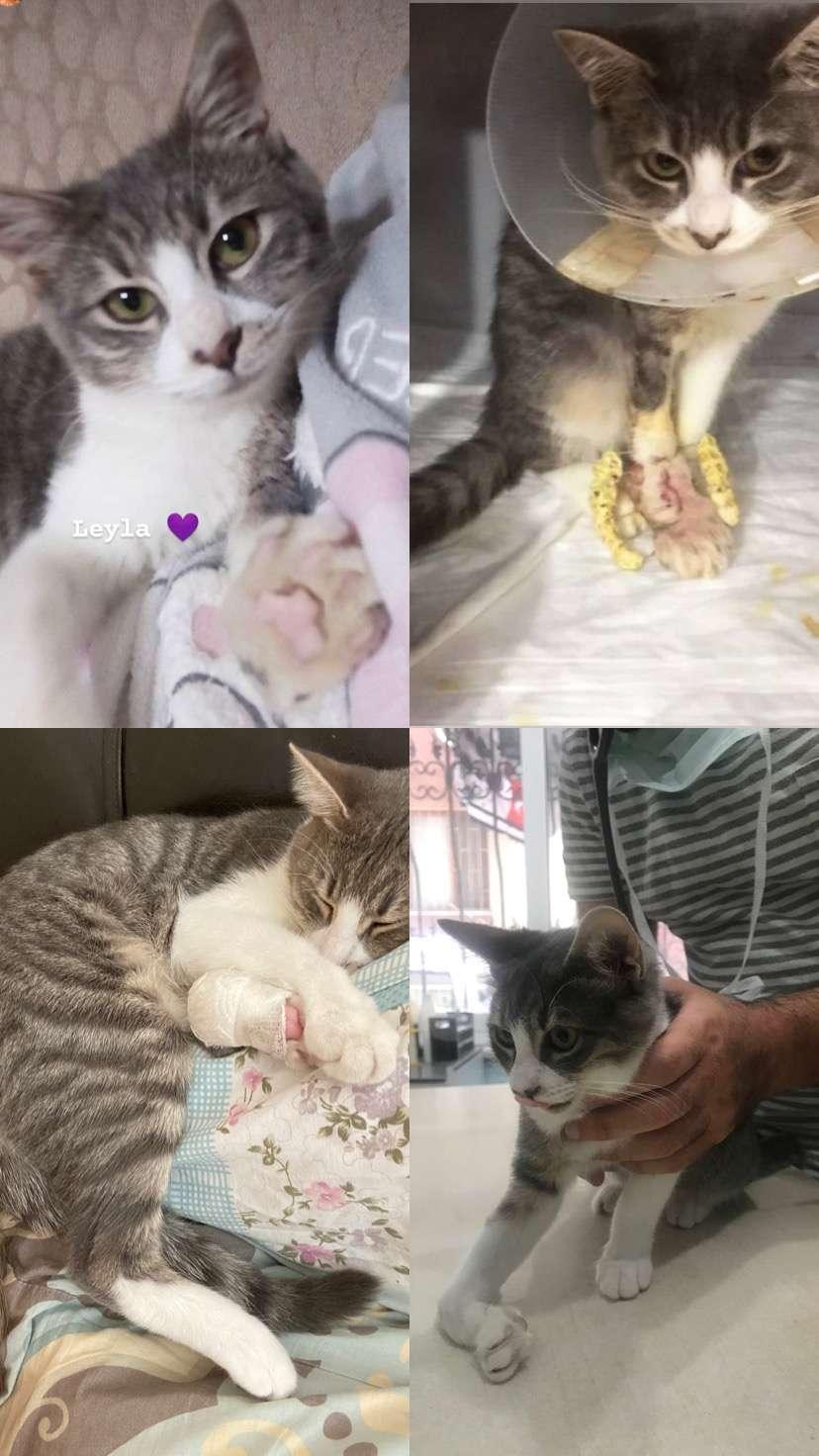 Kayıp Engelli Kedi