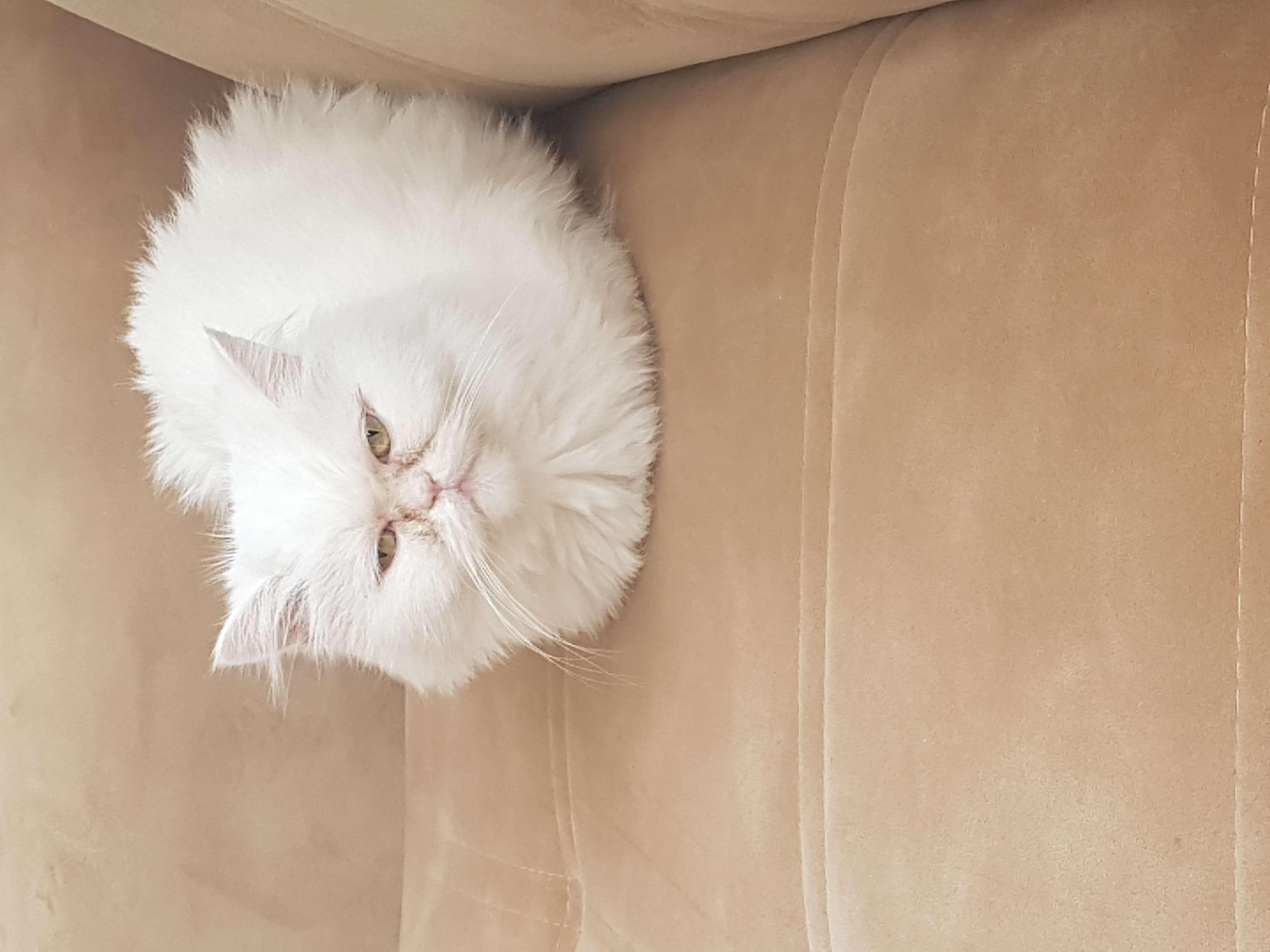 Kedim kayip