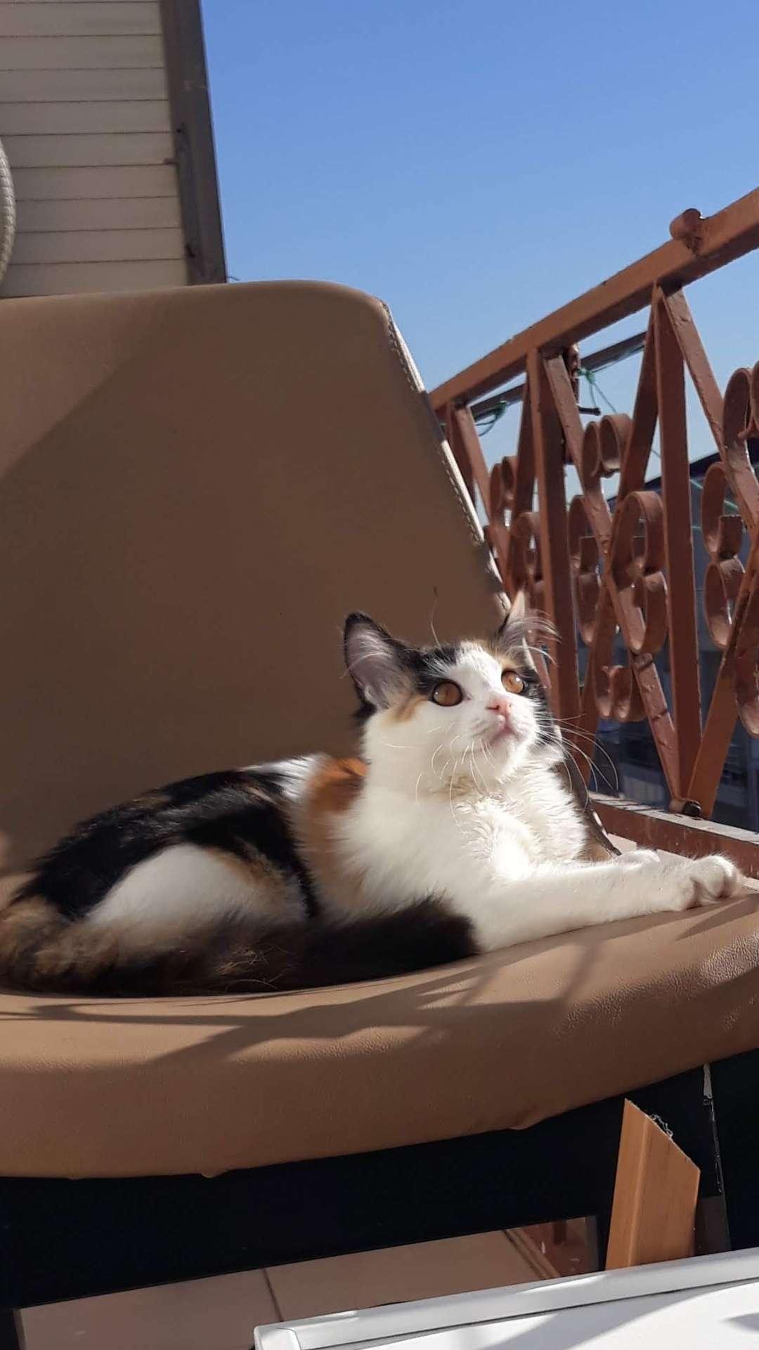Kedim Kayboldu
