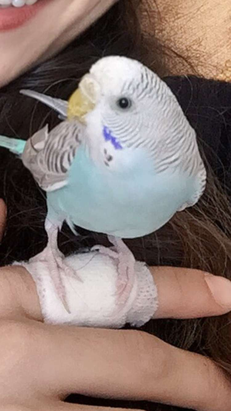 Muhabbet kuşum