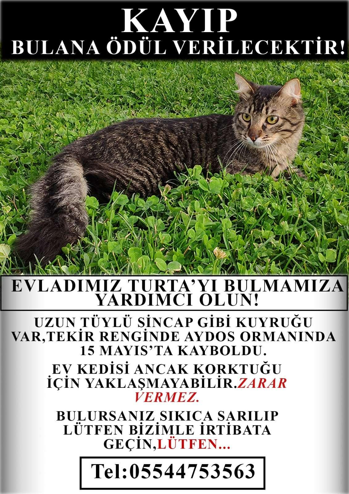 Aydos Ormanı'nda kaybolan kedimizi arıyoruz.