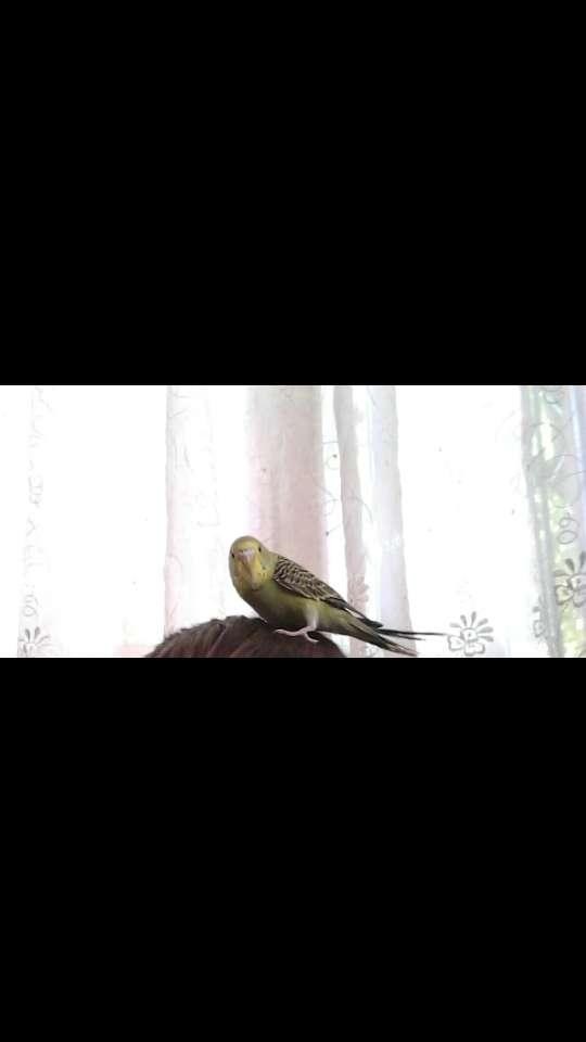Kayıp kuş
