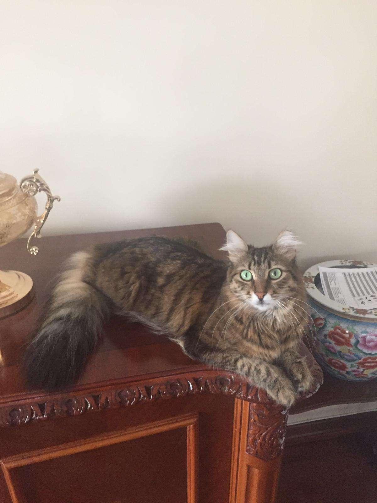 Kedim Maya, canım kayıp !