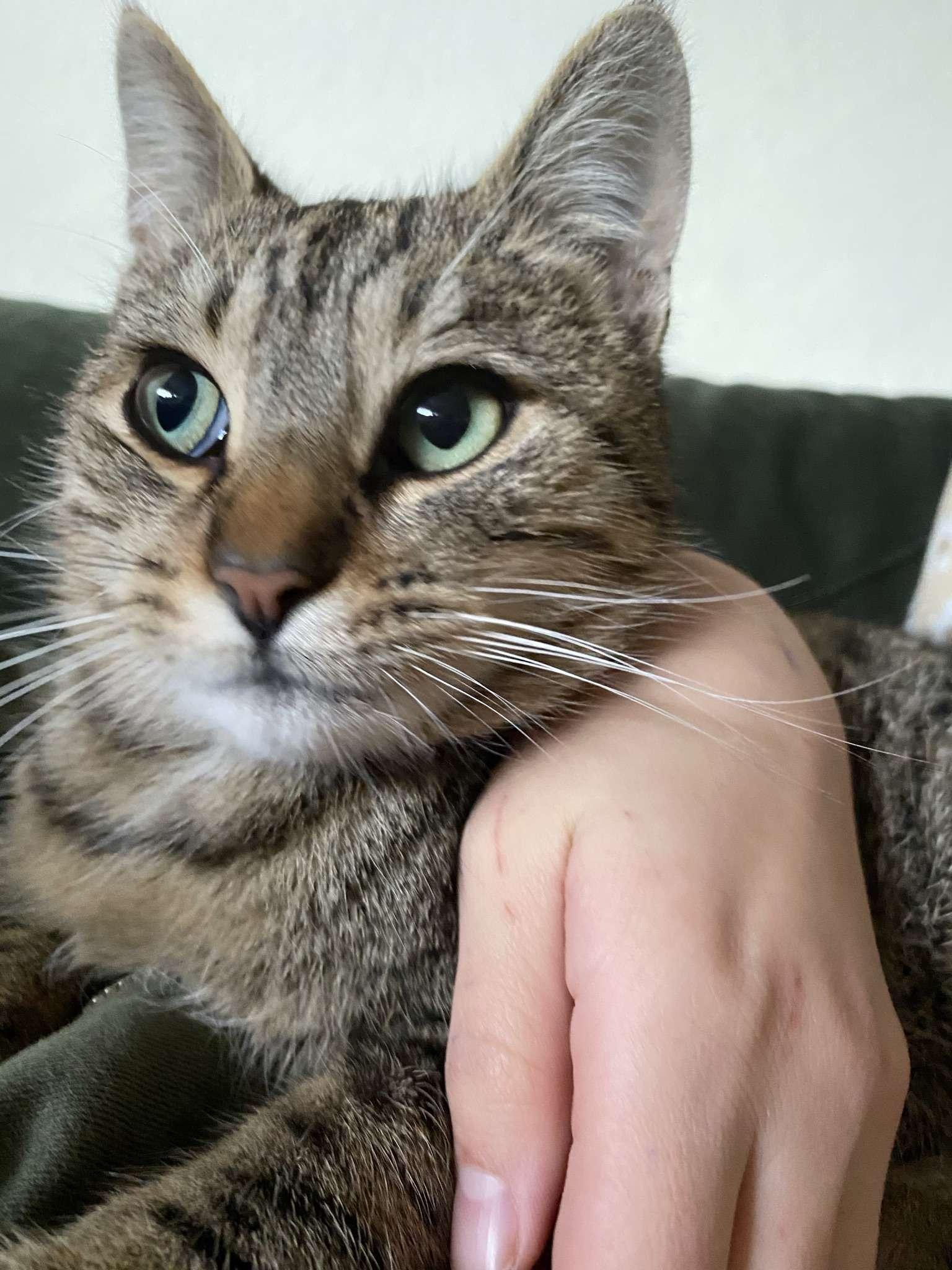 Kedim Dombili kayboldu