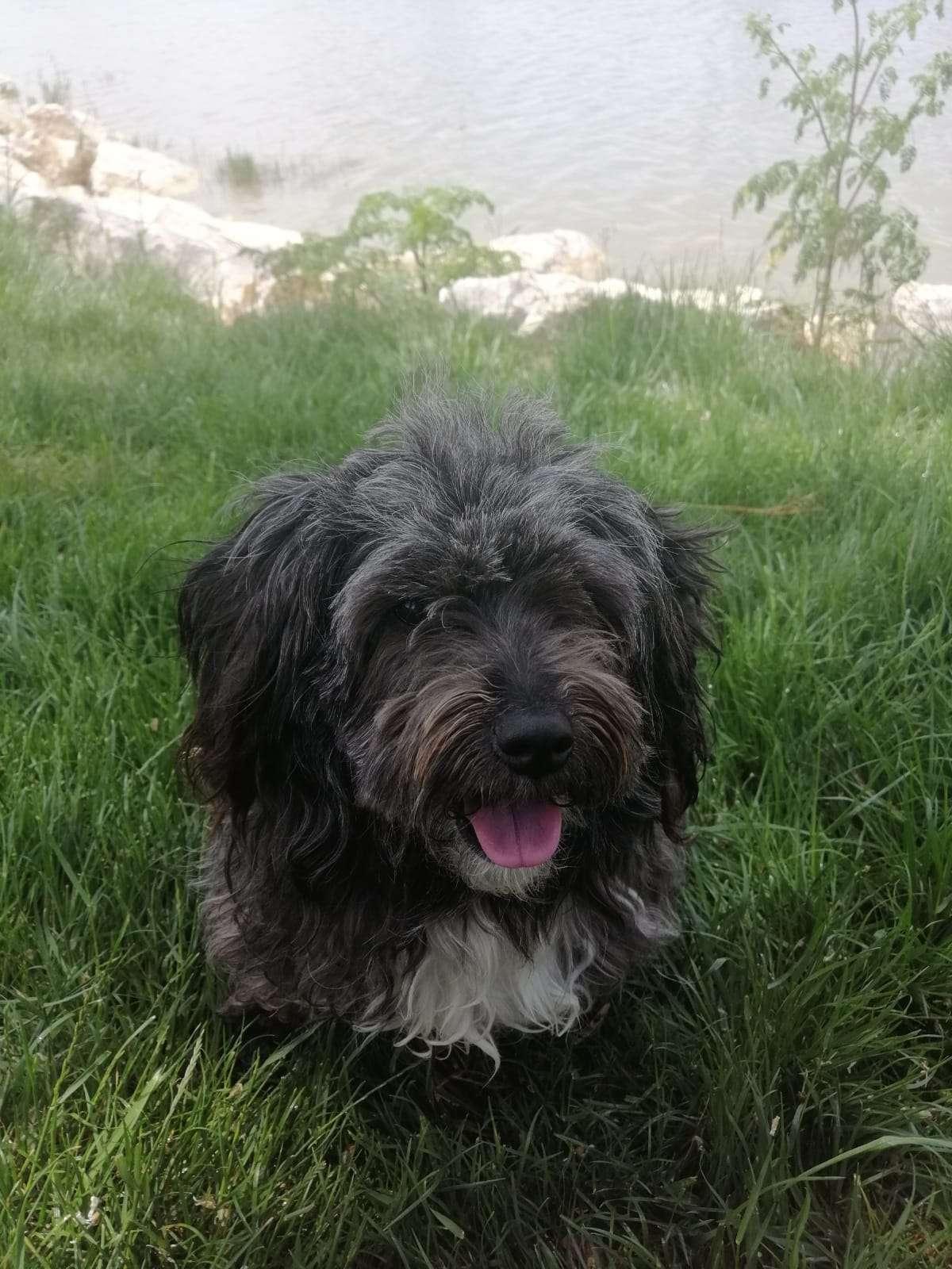 Köpeğimiz Şila Kayboldu