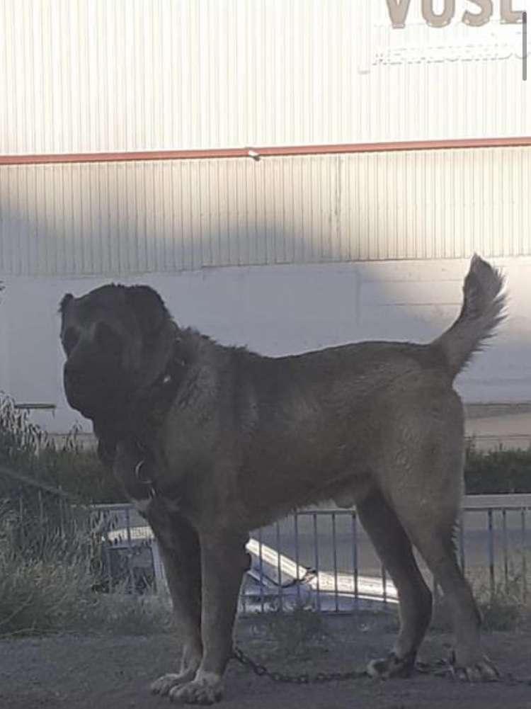 Köpeğimiz Ankara Yakacık Hurdacılardan Çalınmıştır