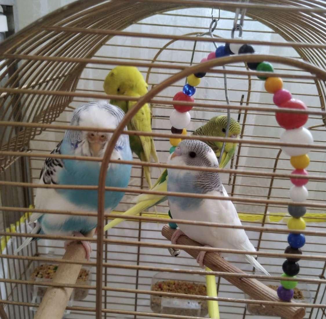Muhabbet kuşlarım kayıp