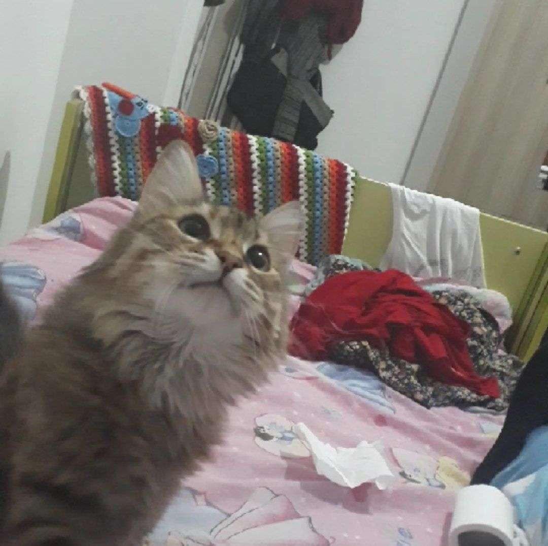 Kayıp Kedi Şeker