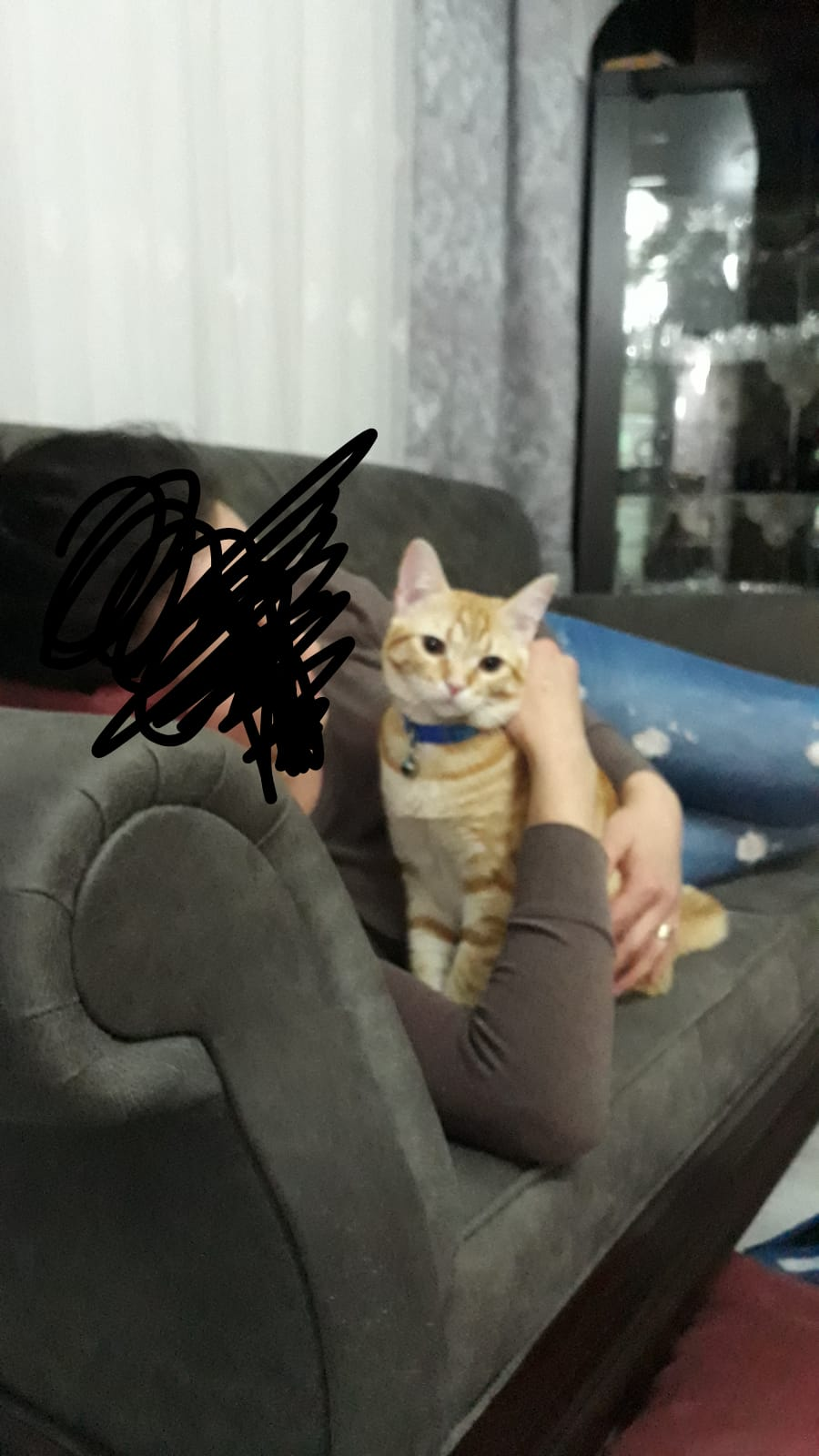 Kedim Tarçın Kayıp!