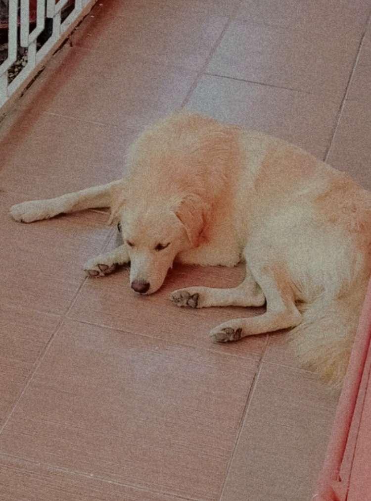 Köpeğim kayıp lütfen yardımcı olun