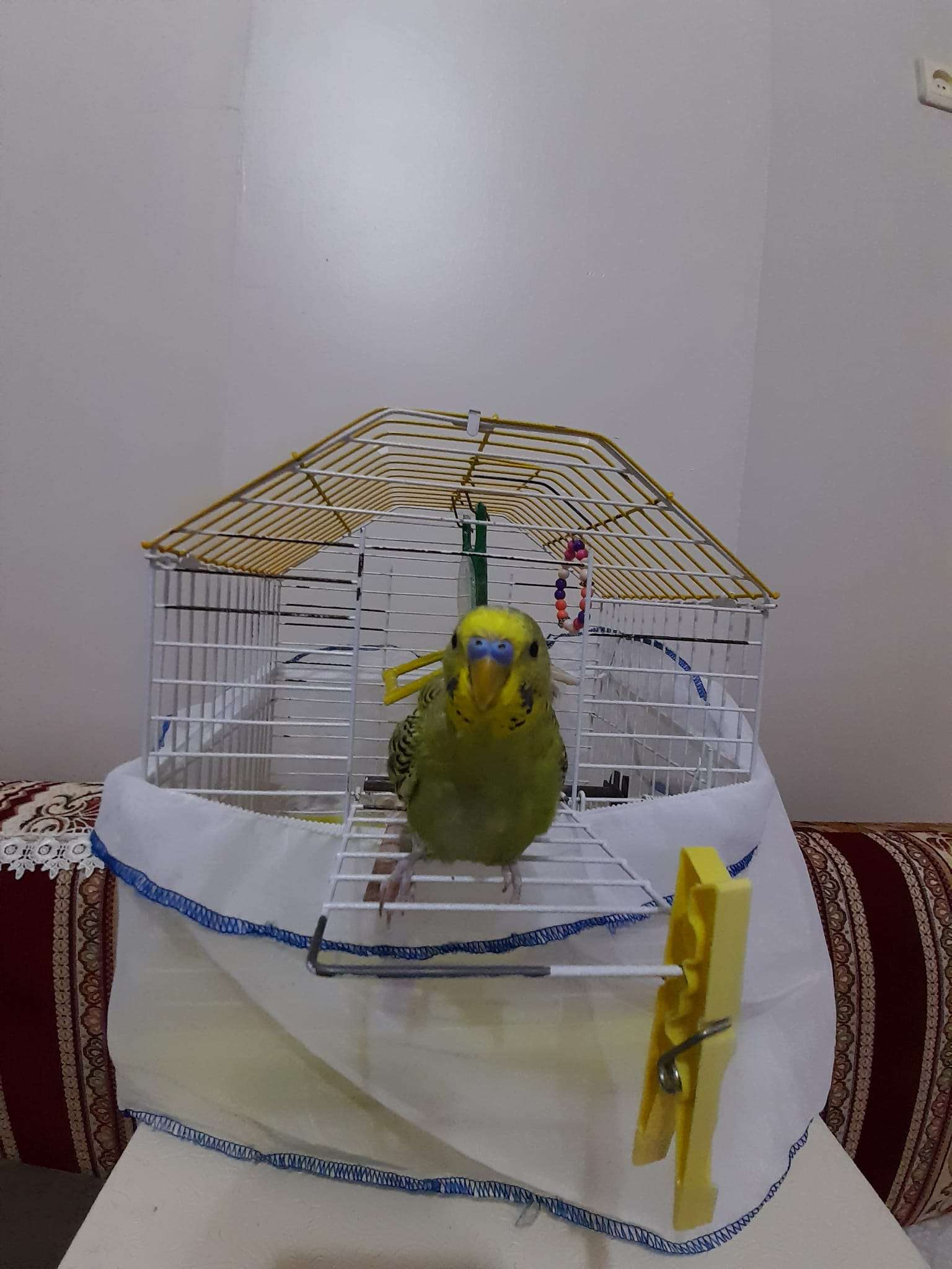 Muhabbet kuşumuz kayıp