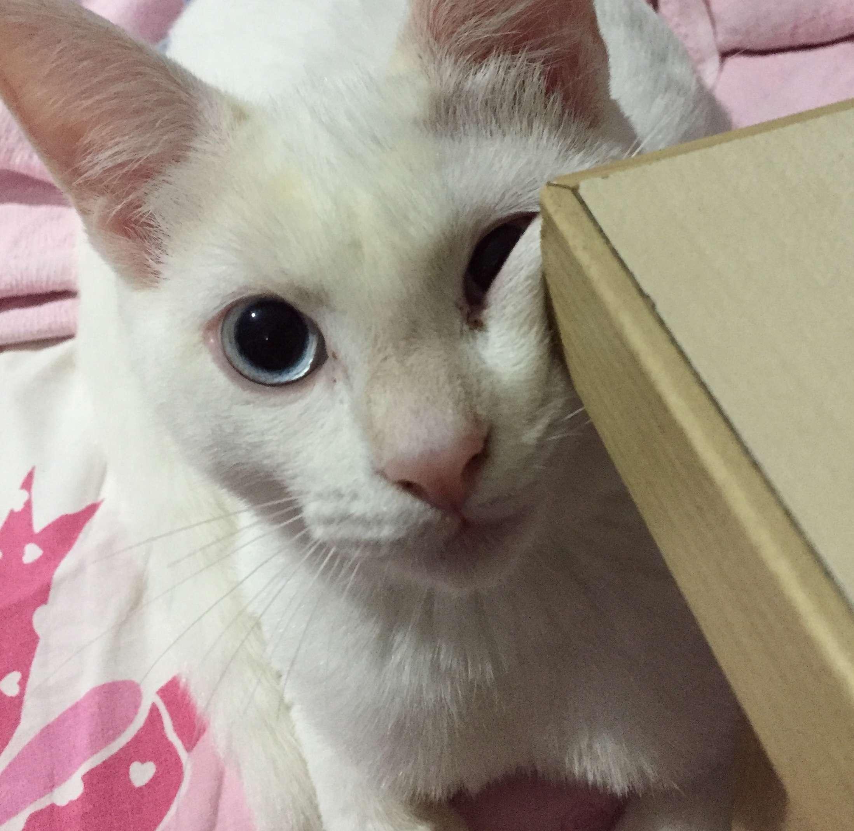 Kocaeli kayıp kedi
