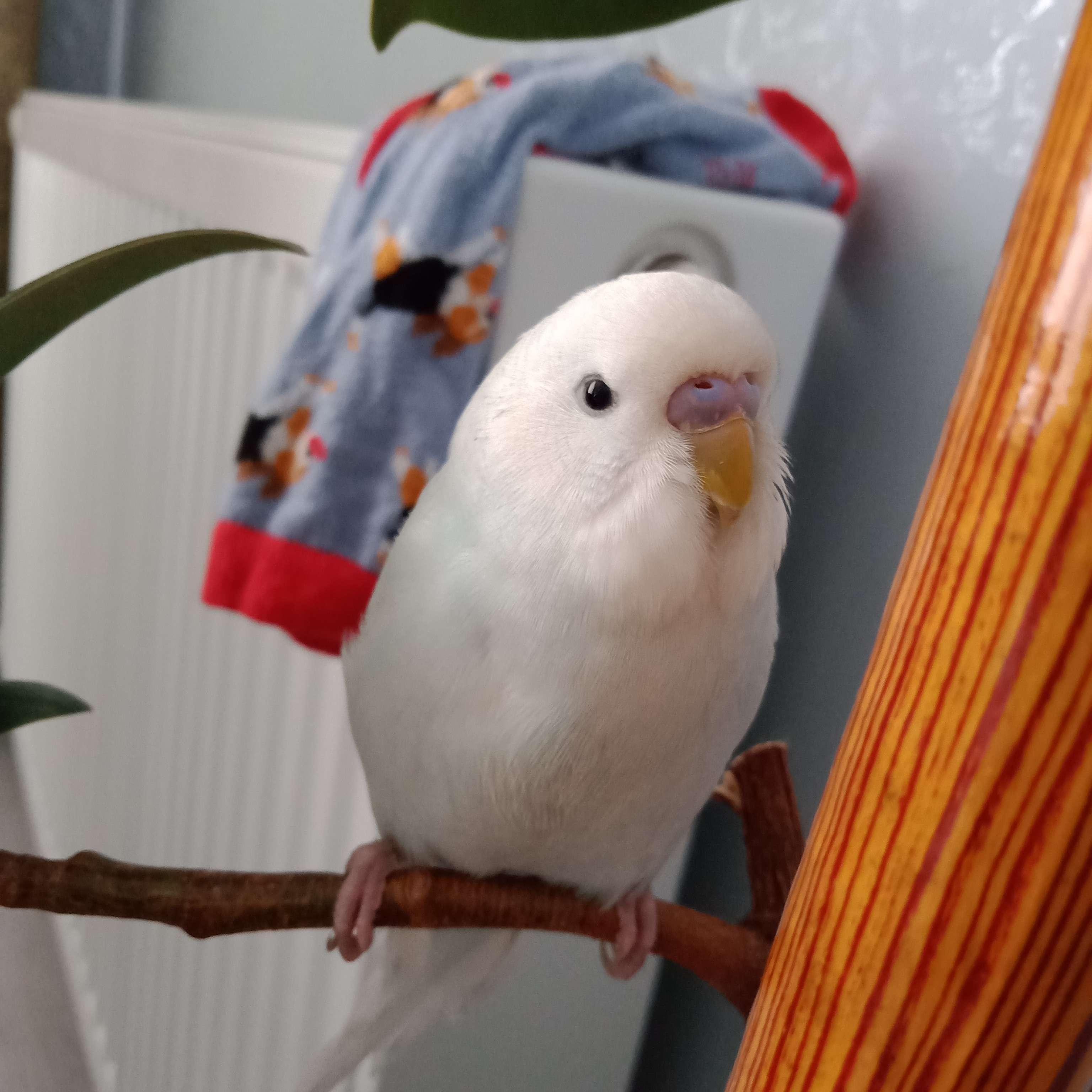 Kuşum doğuracak eşini bırakıp gitti onu bulmamam lazım