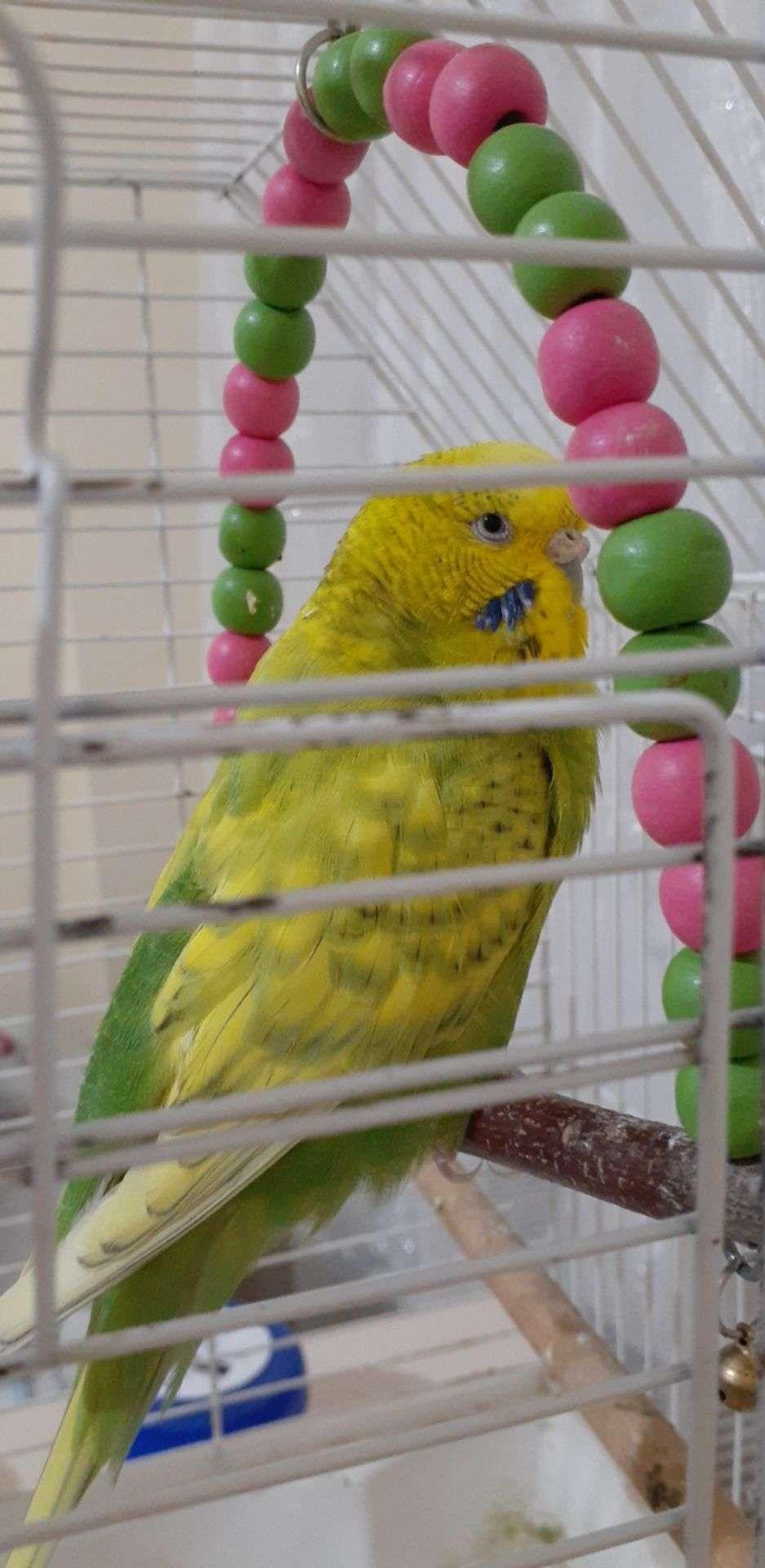 Depremden sonra kaybolan evcil kuş