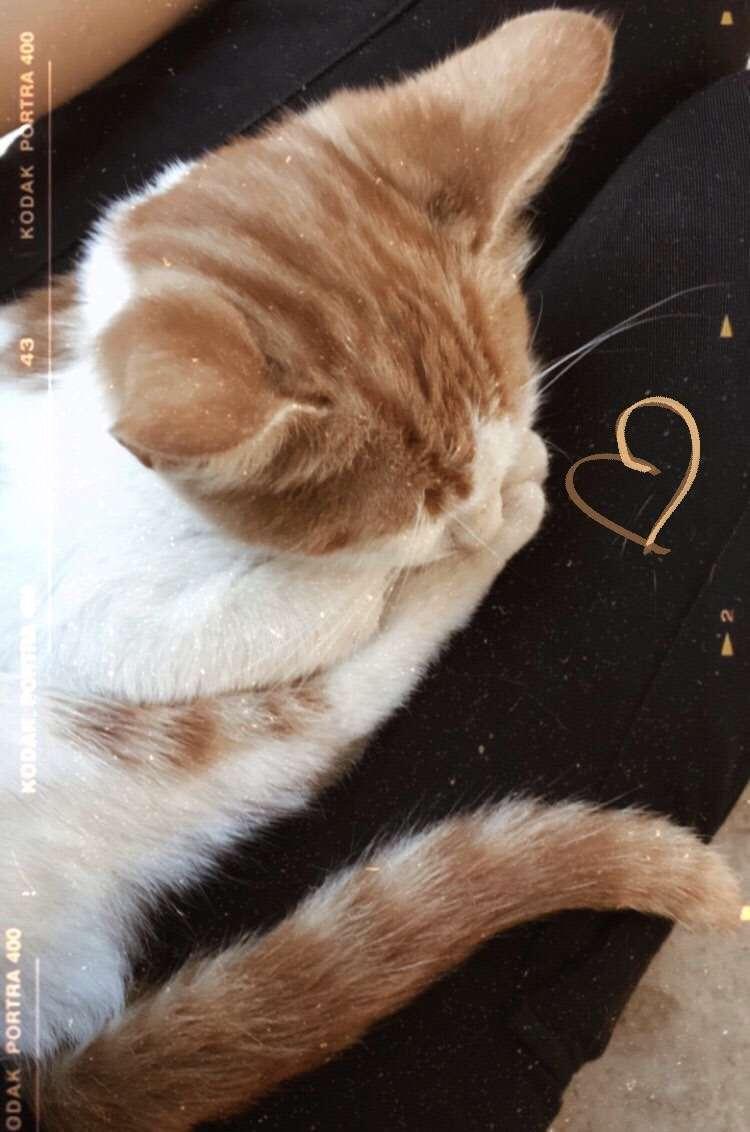 İstanbul/Kartal/Atalar da kedimiz kayıp olmuştur gören olursa haber verilmesi iyi olur