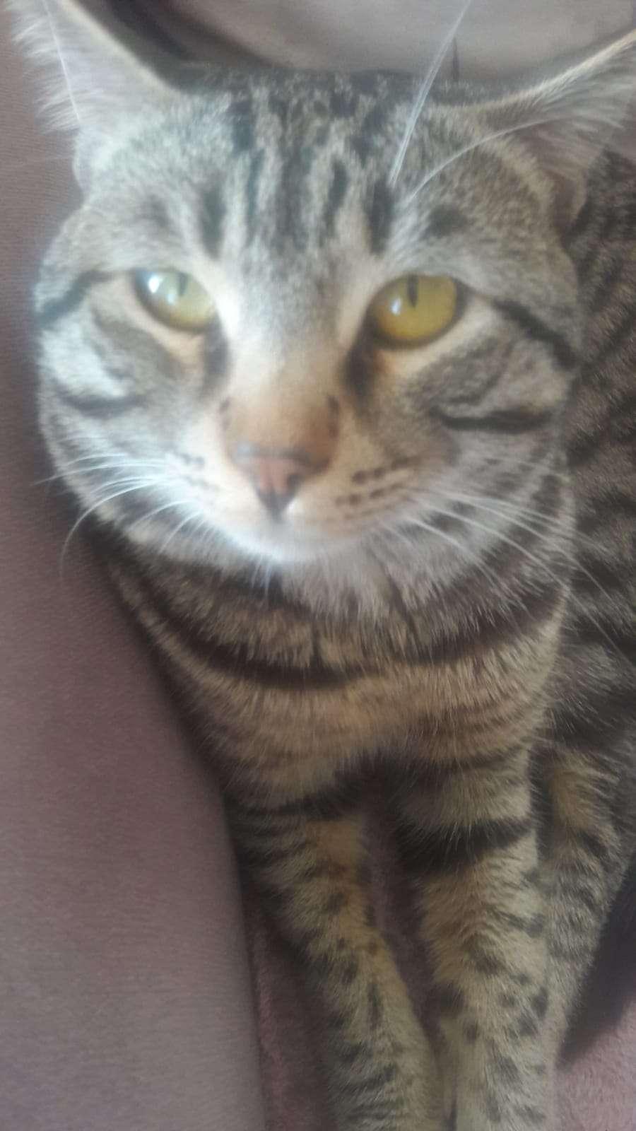Kayıp ev kedisi