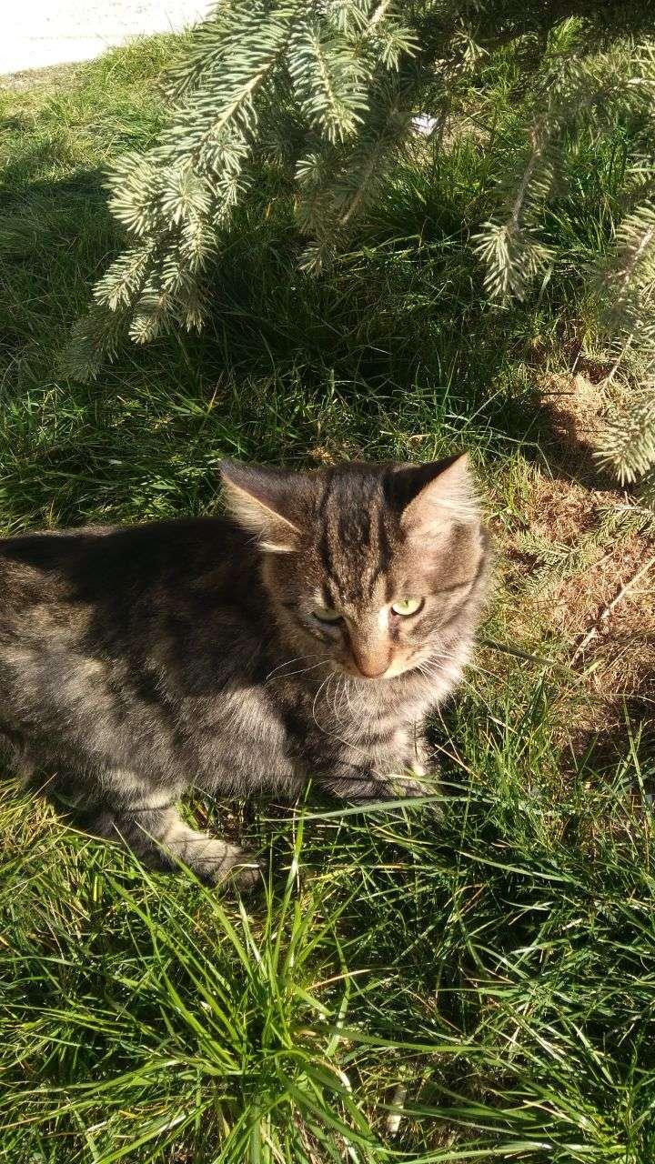 Kayıp Kedi Zeytin