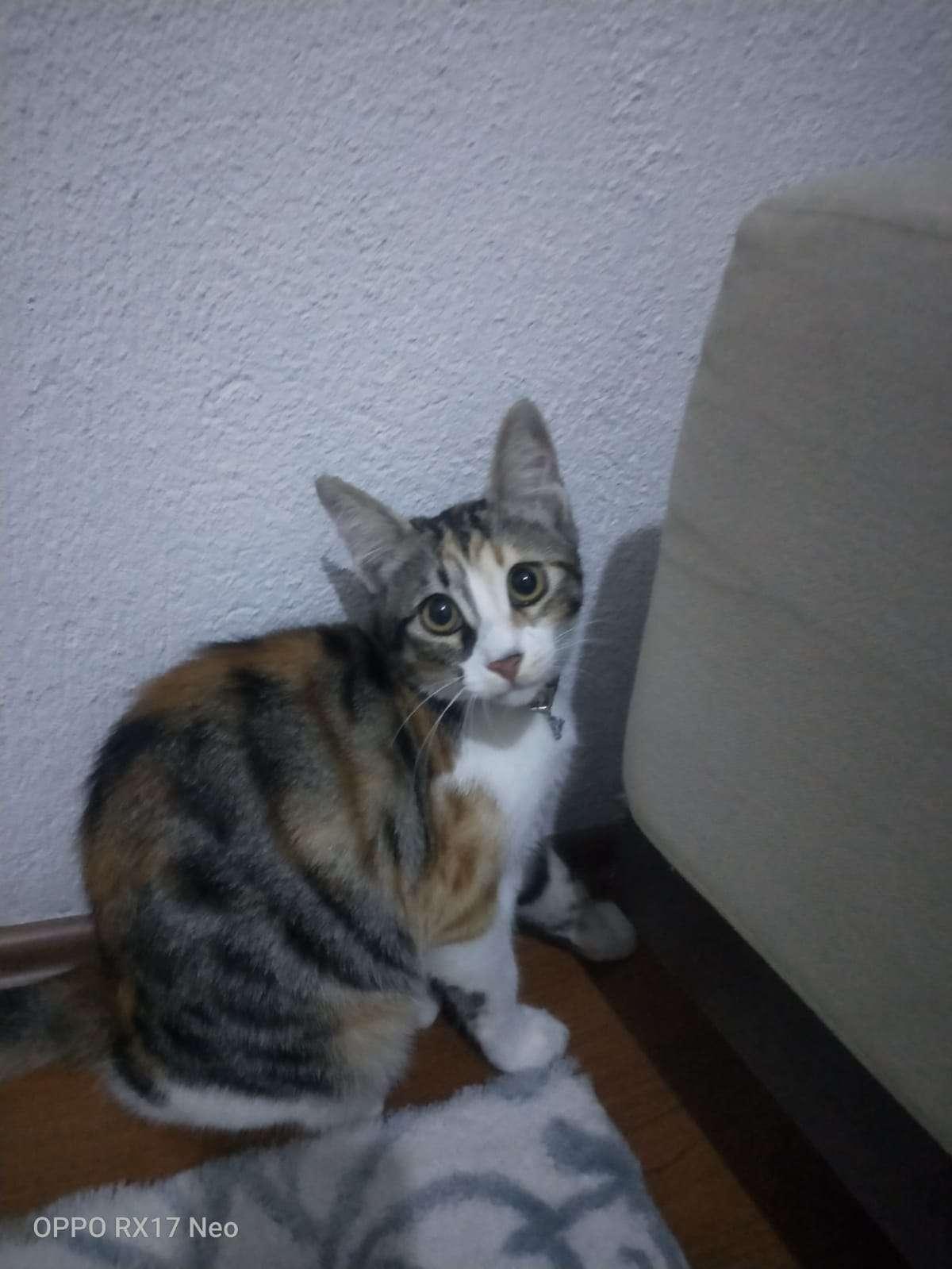 Kedim pazar günü kayboldu