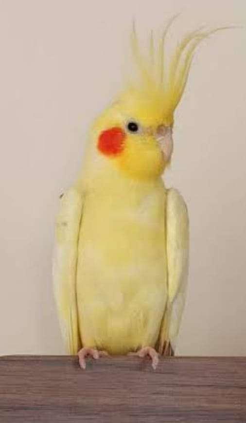 Kuşumuz kayıp