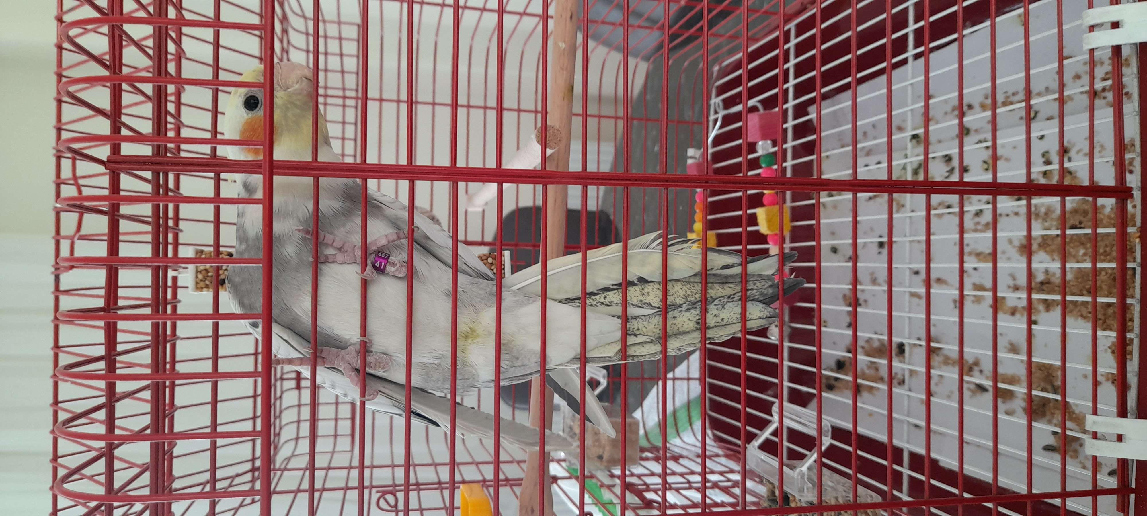 Kayip sultan papagani