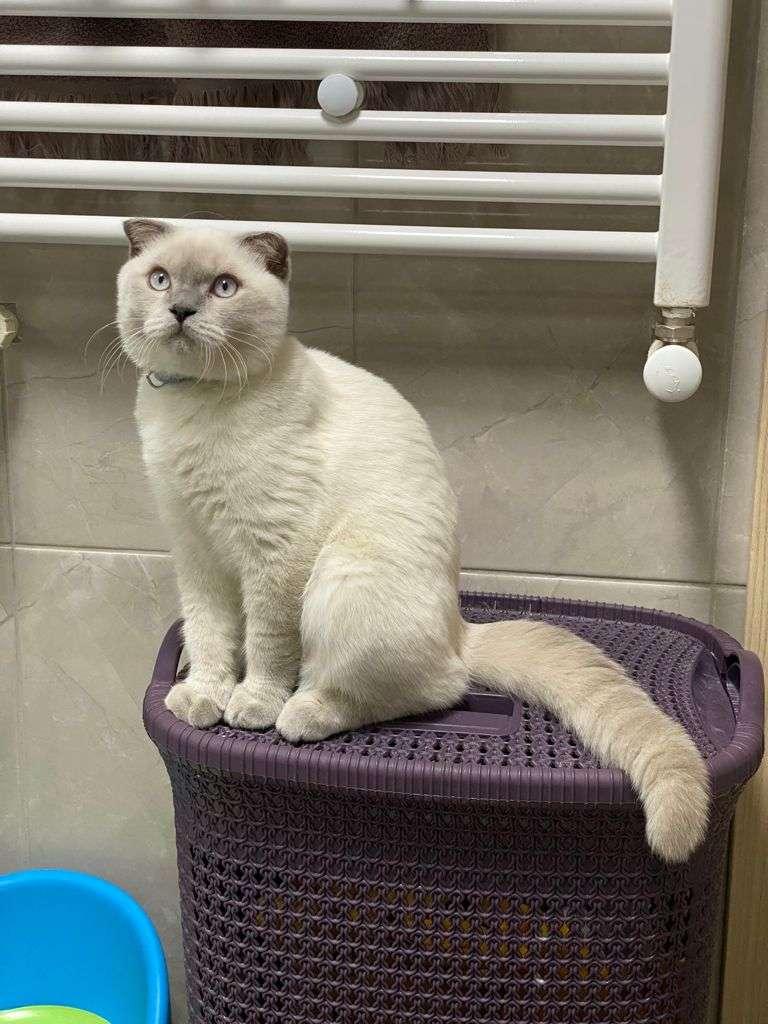 Adana Çukurova Kayıp Kedi Neo