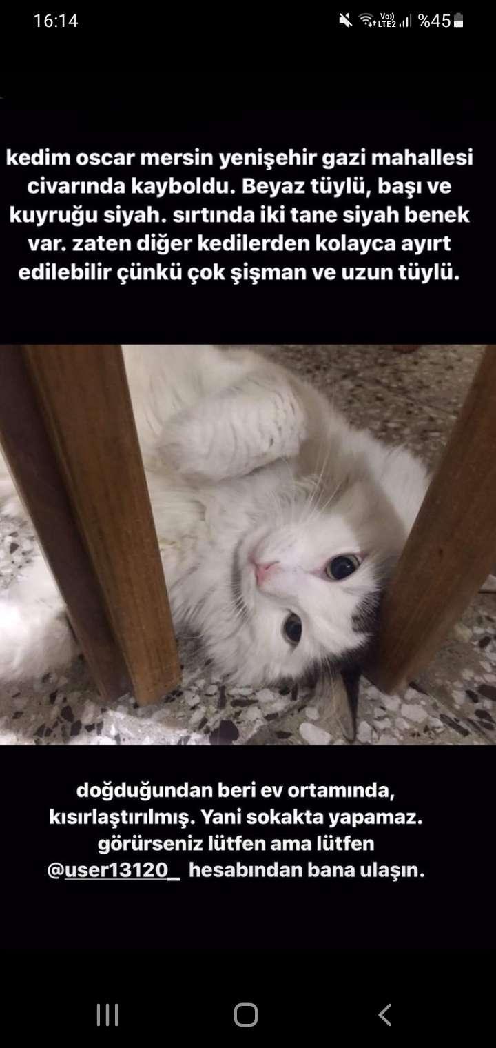 Mersin Kayıp Kedi İlanı