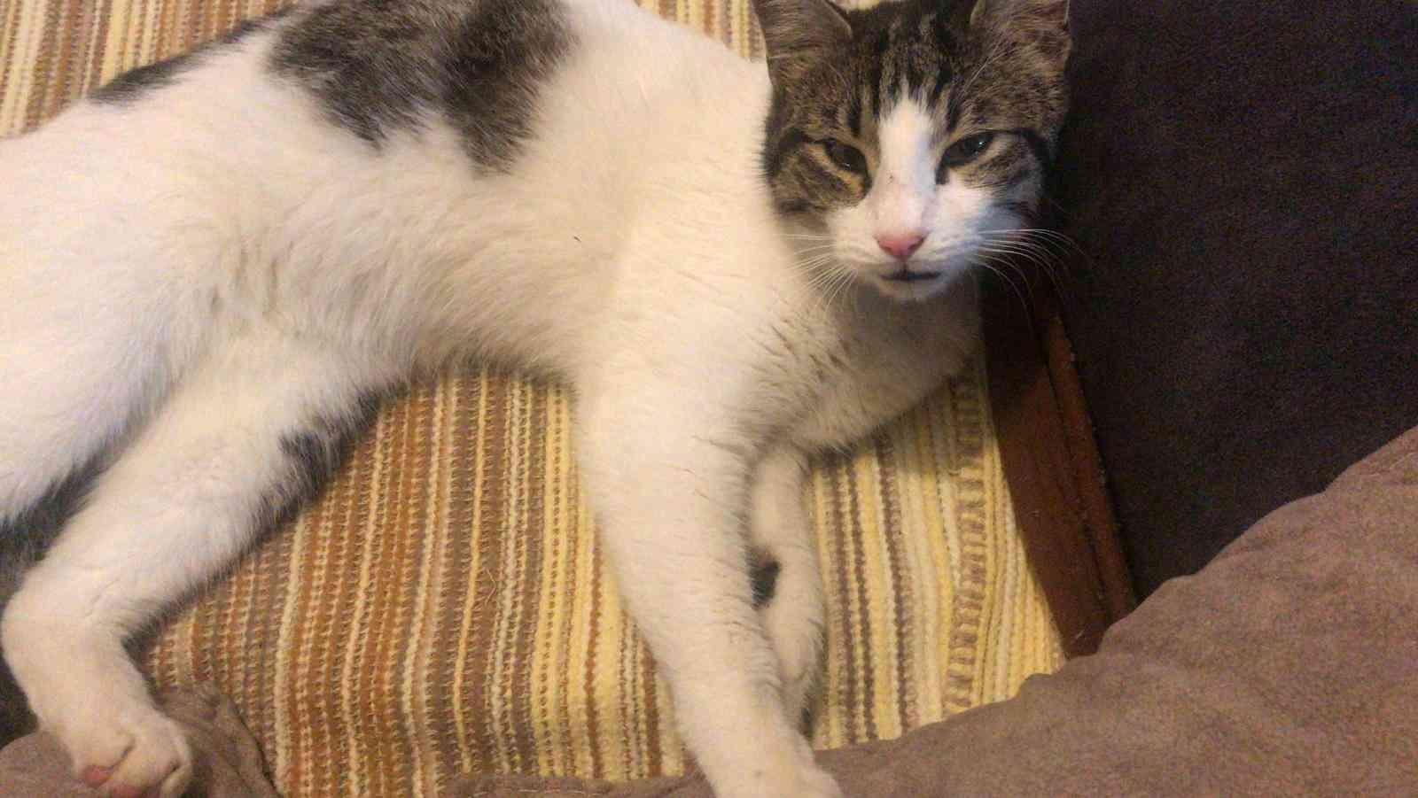 Üsküdar/Küçük Çamlıca - Sahibini Arayan Kedi