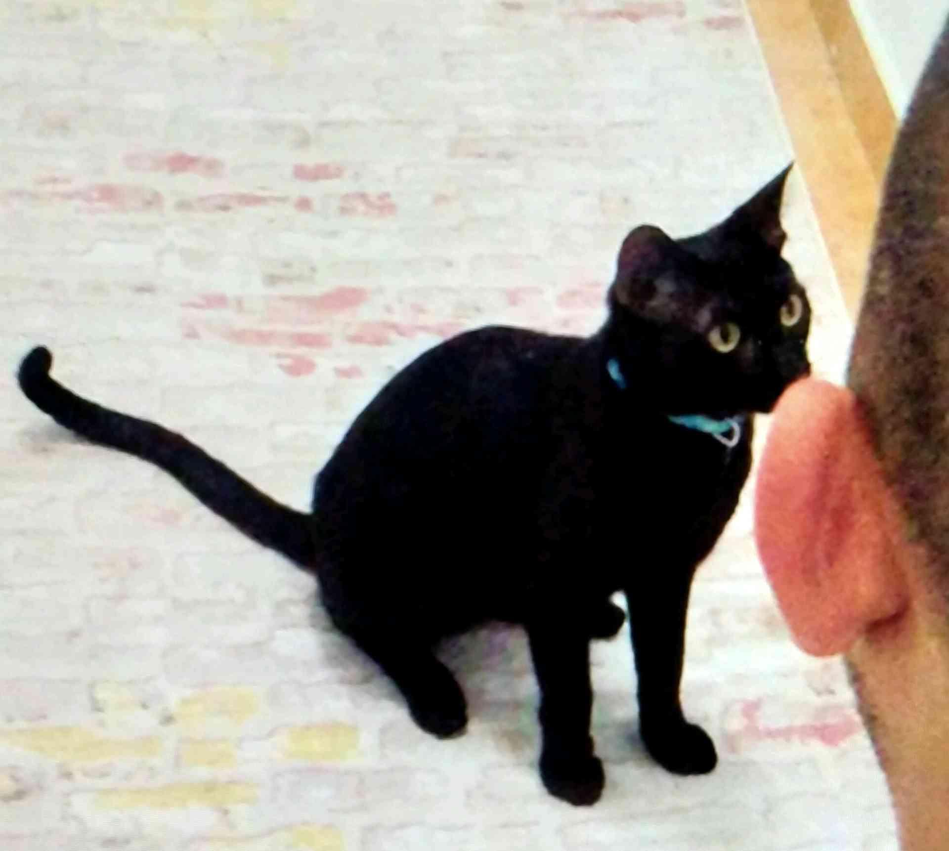İzmir buca yiğitler mahallesi Bombay kedim kaybodu
