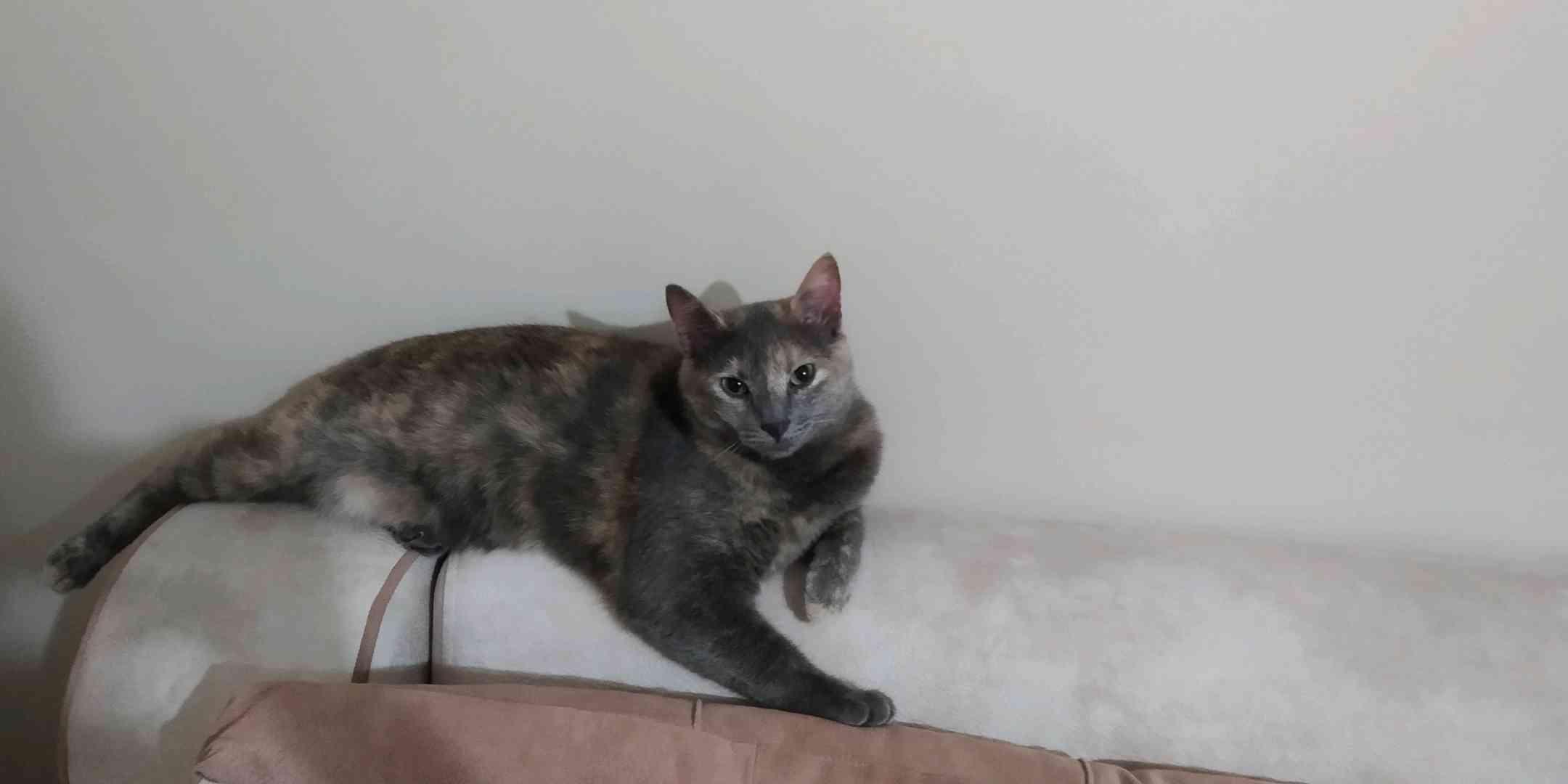 Kocaeli gölcük koray Aydında yesil gozlu kedim kayboldu