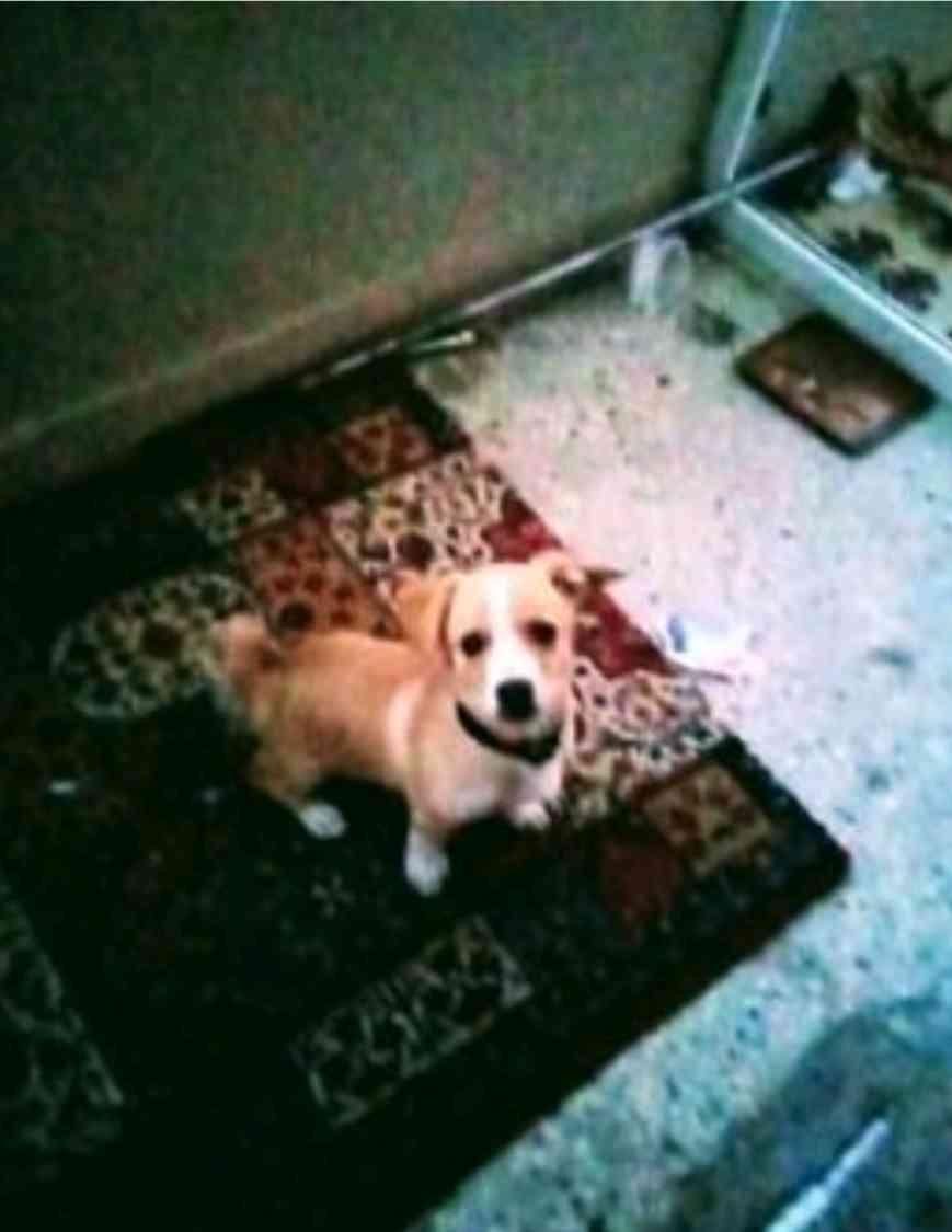 bursa karacabeyde sarı kahverengi sivava köpeğim kaybol
