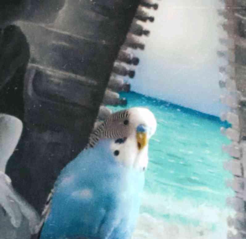 muhabbet kuşumuz kayıp lütfen bulan olursa bize desin