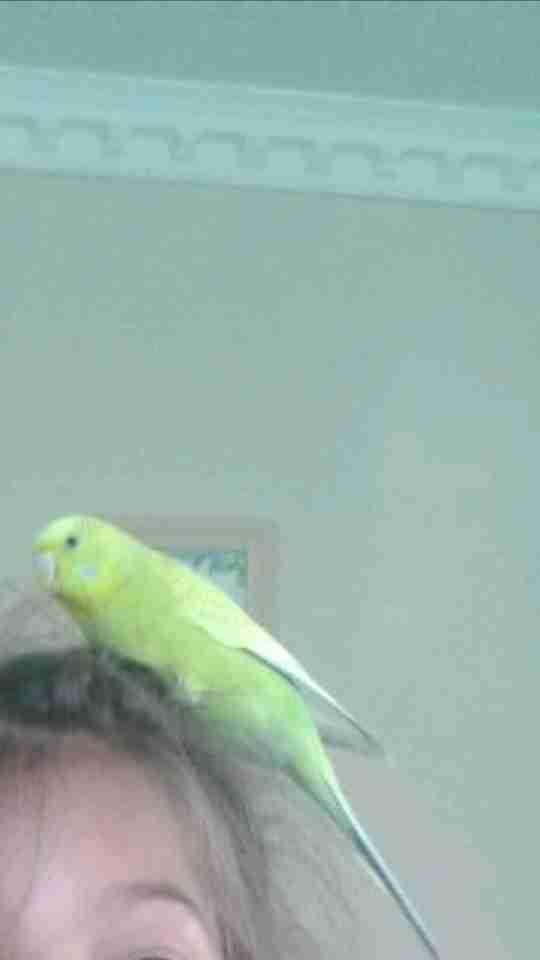 kuşumuz 1 yıla yakın kayıp