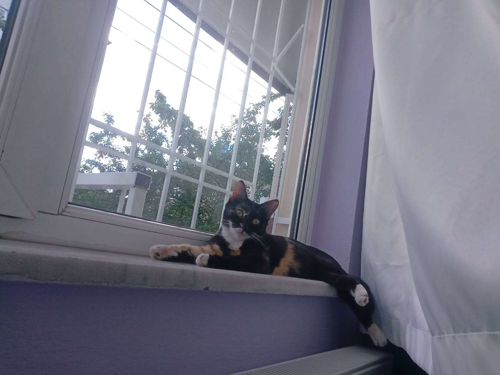 Malatya başharık kayıp kedi ilanı